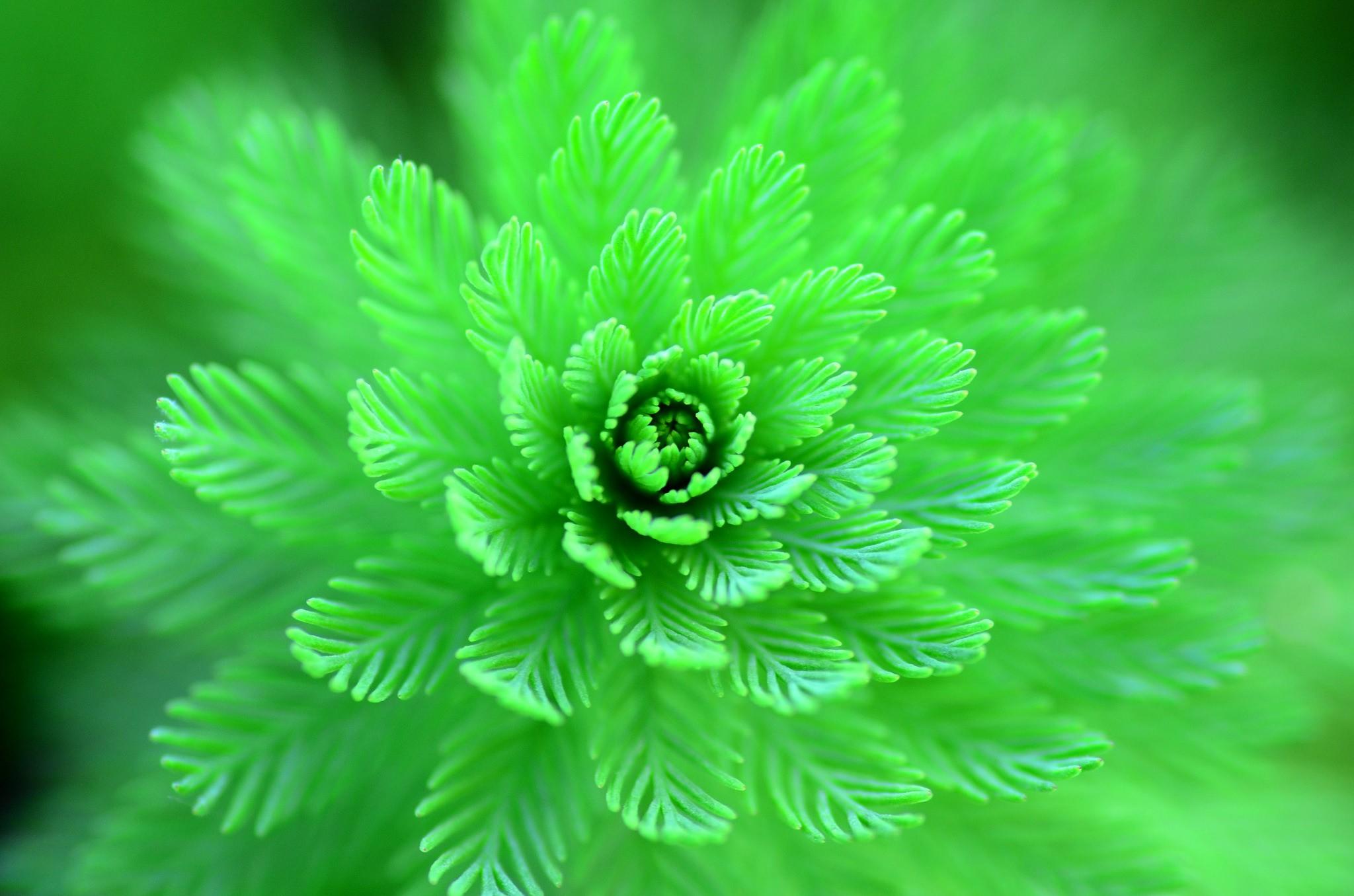 красивые зеленые фотки процессе