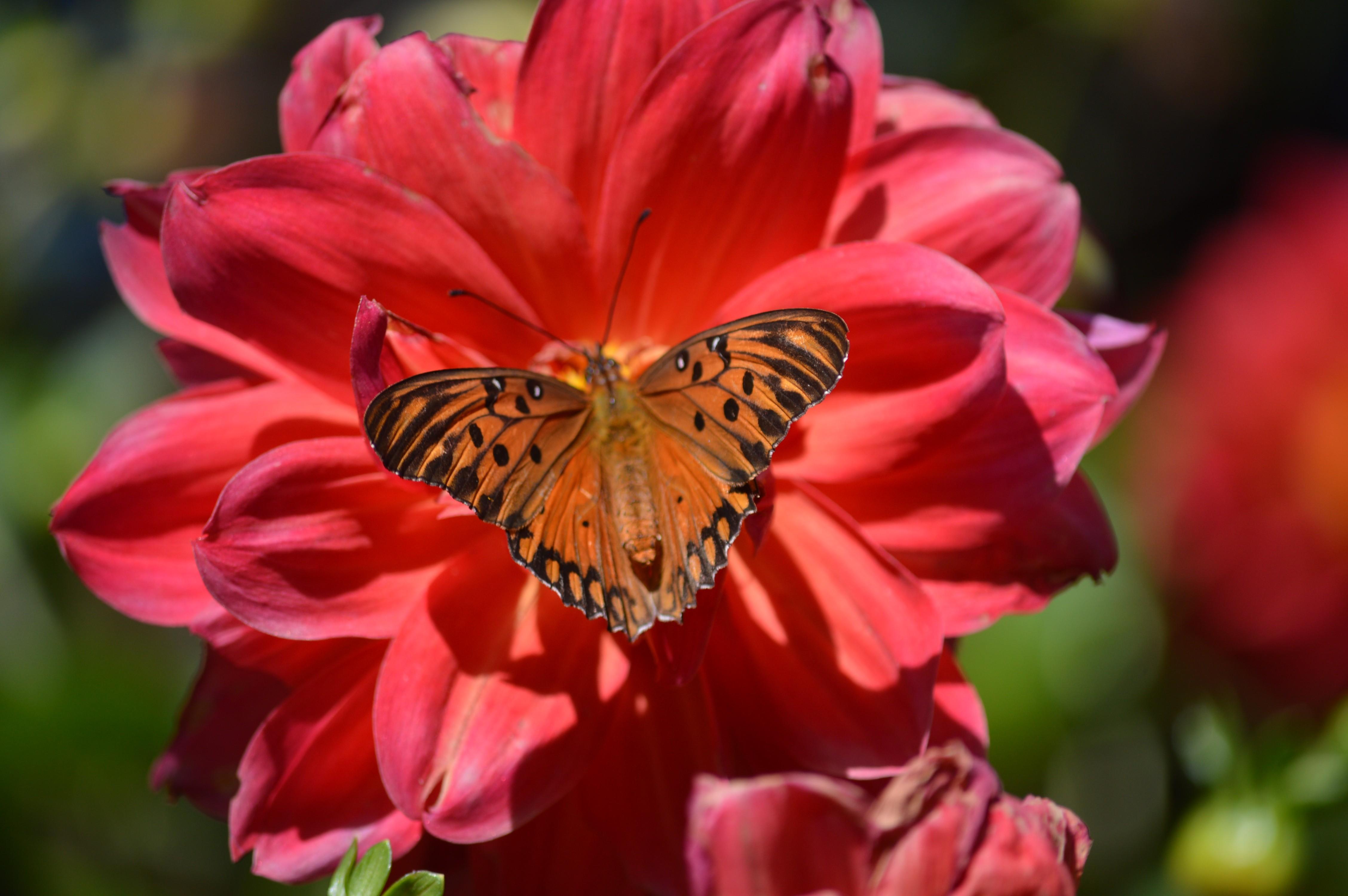 80+ Gambar Bunga Fauna Terbaik