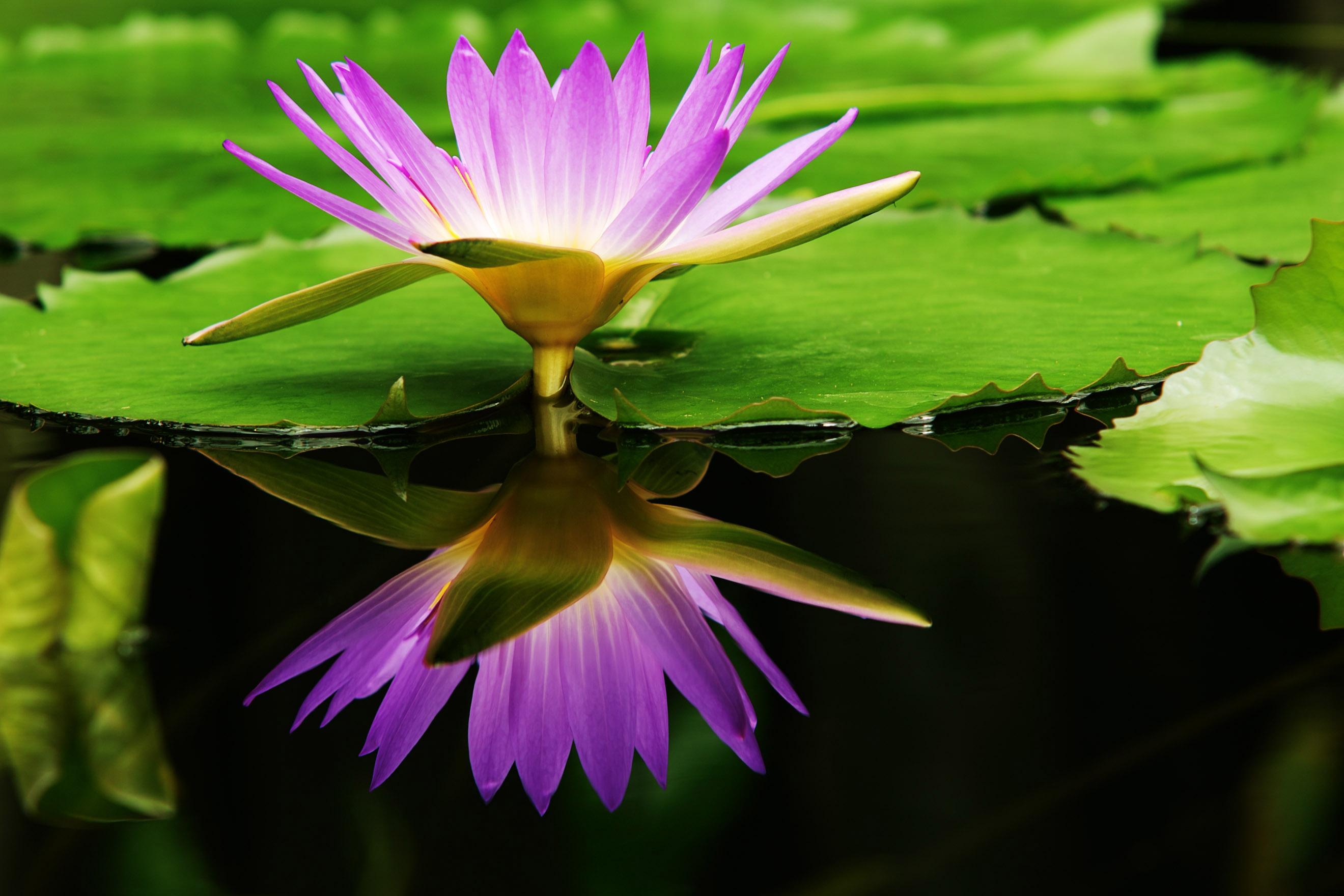 центр картинка удивительного цветка подвидов густеры
