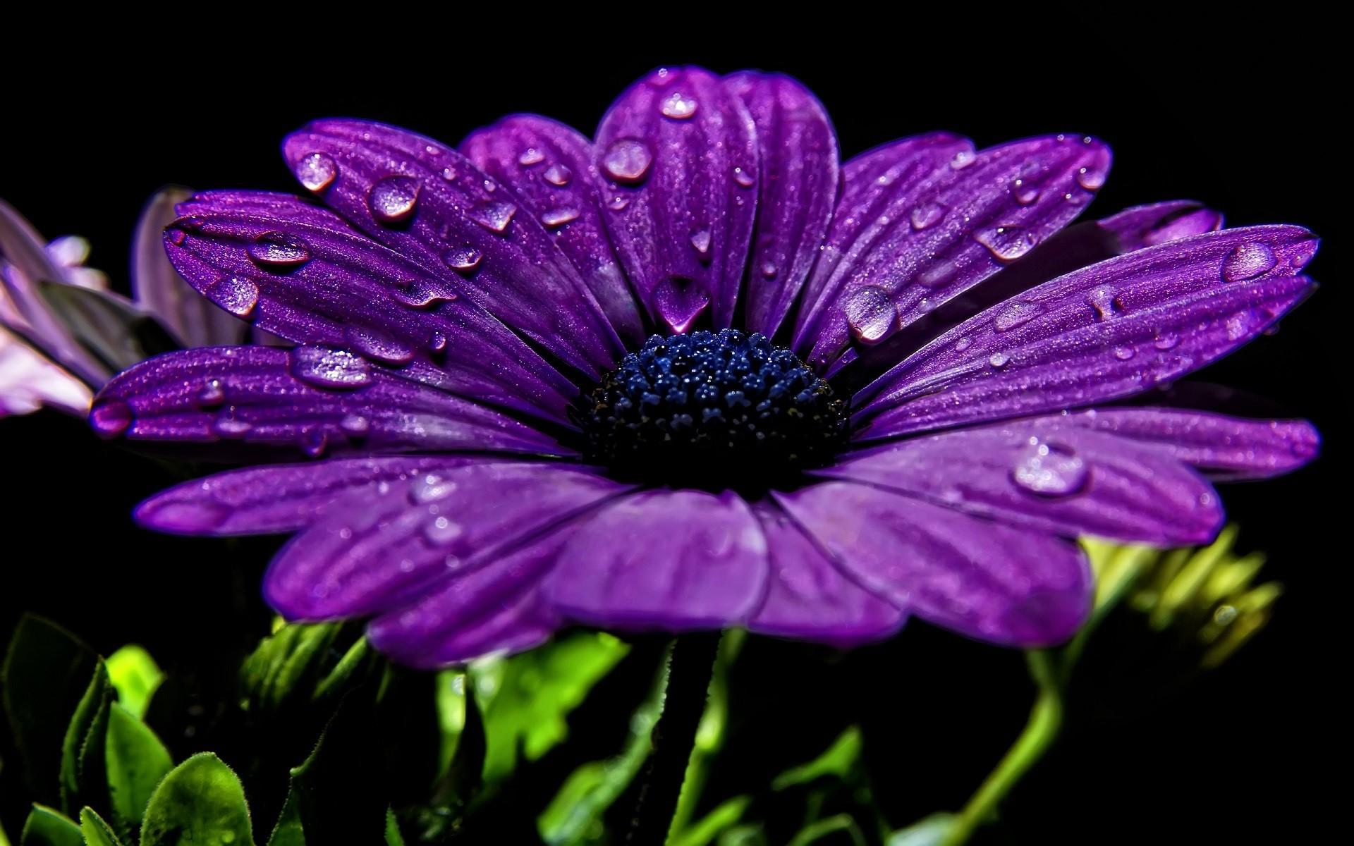 выбор картинки высокого разрешения фиолетовые кусок ткани