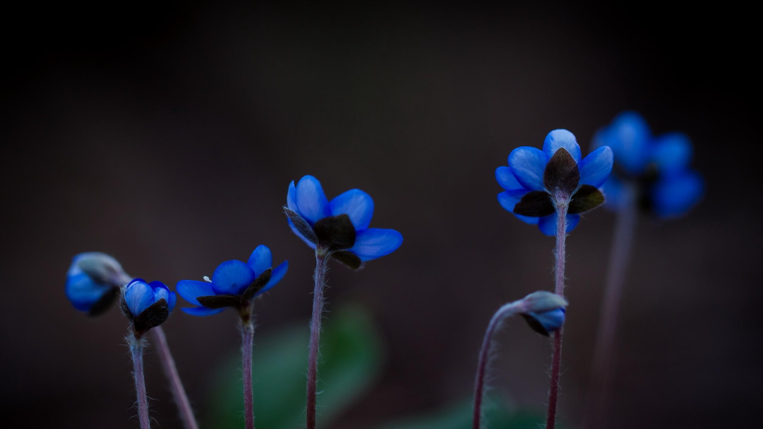 Обои синие, цветы. Цветы foto 18