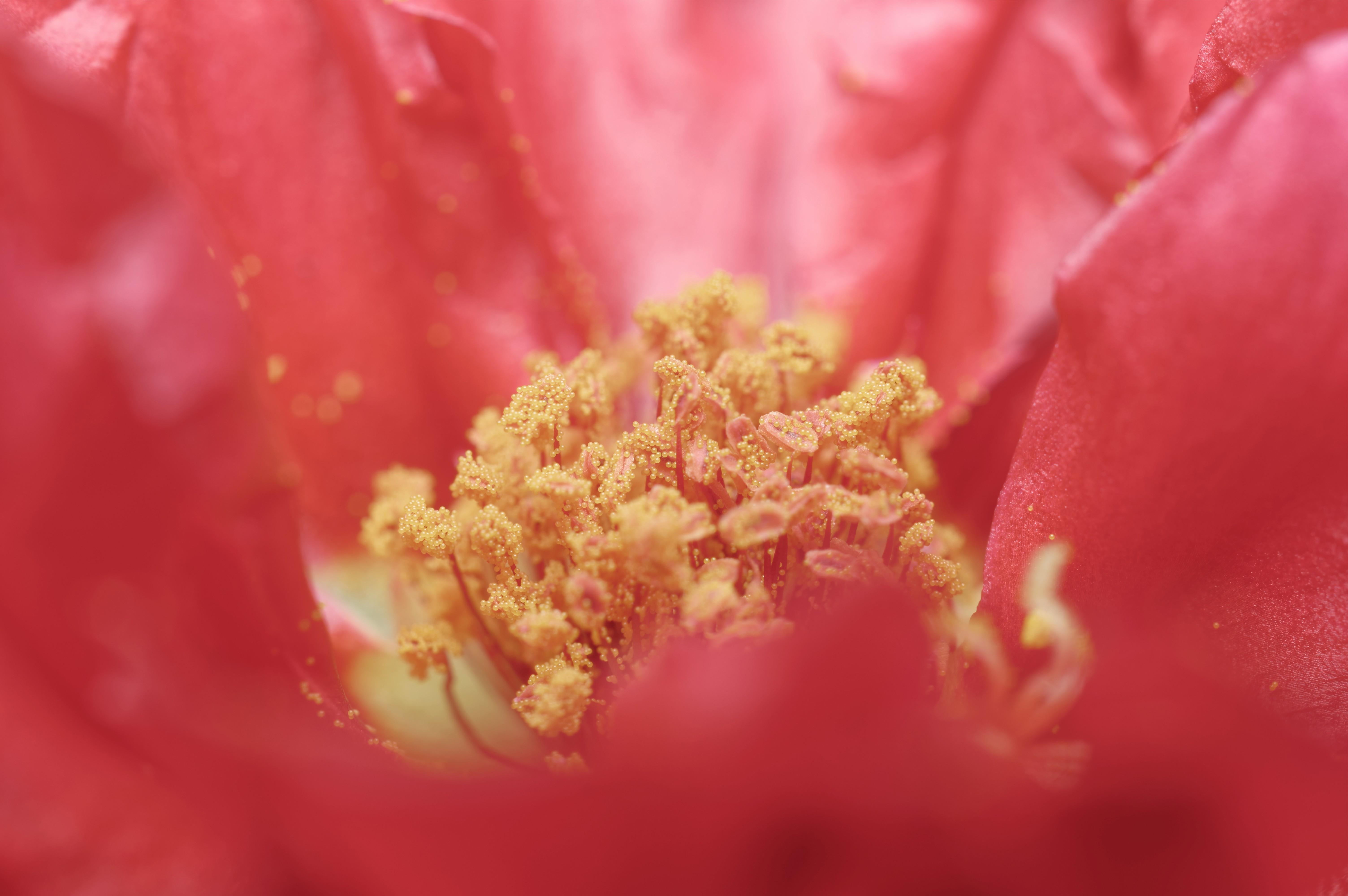 обиходе пыльца цветов фото пансионат одном живописнейших
