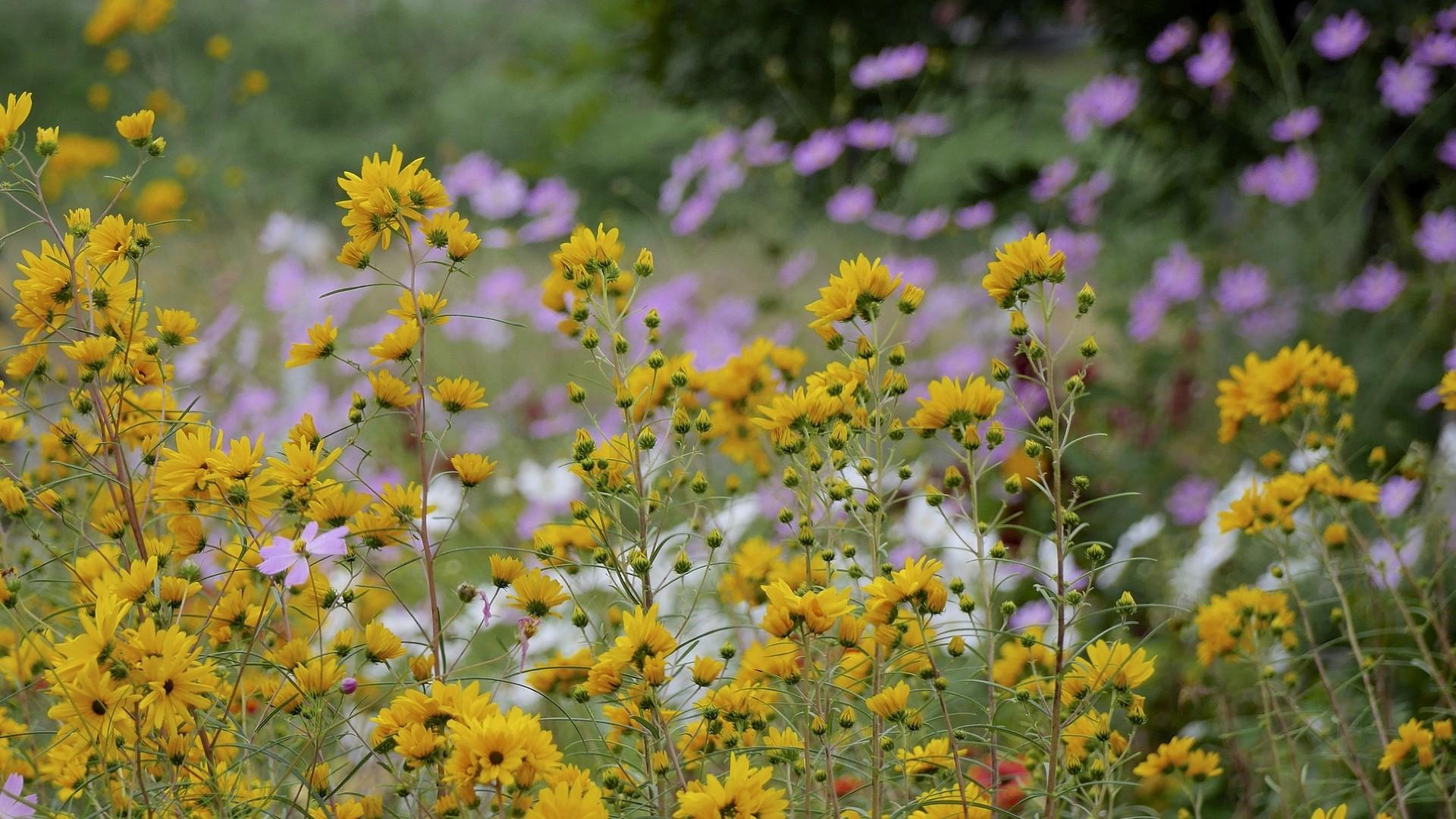 Wallpaper Nature Yellow Flowers Field Blossom Herb Autumn
