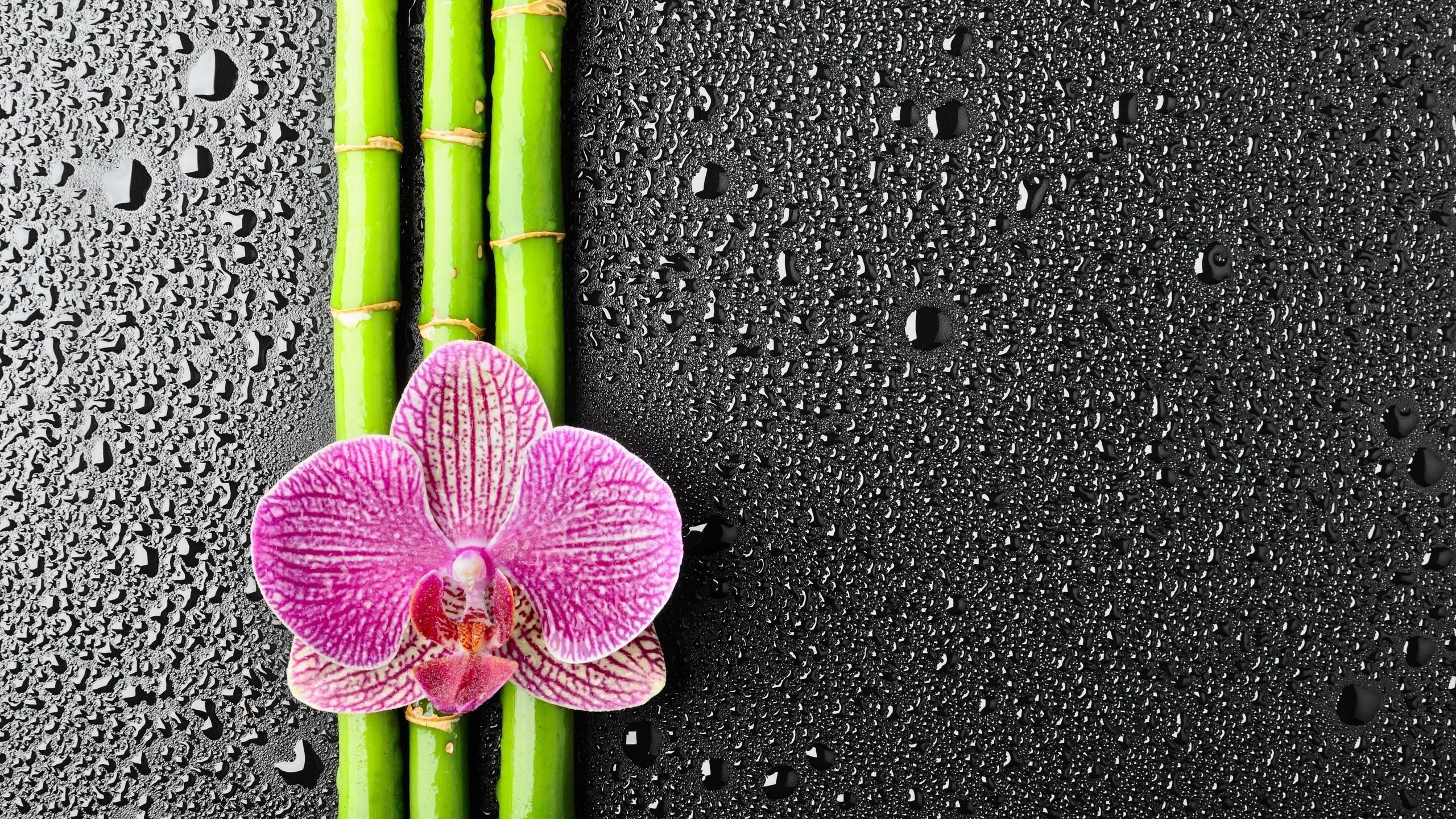Fondos De Pantalla Flores Orquideas Plantas Gotas De Agua