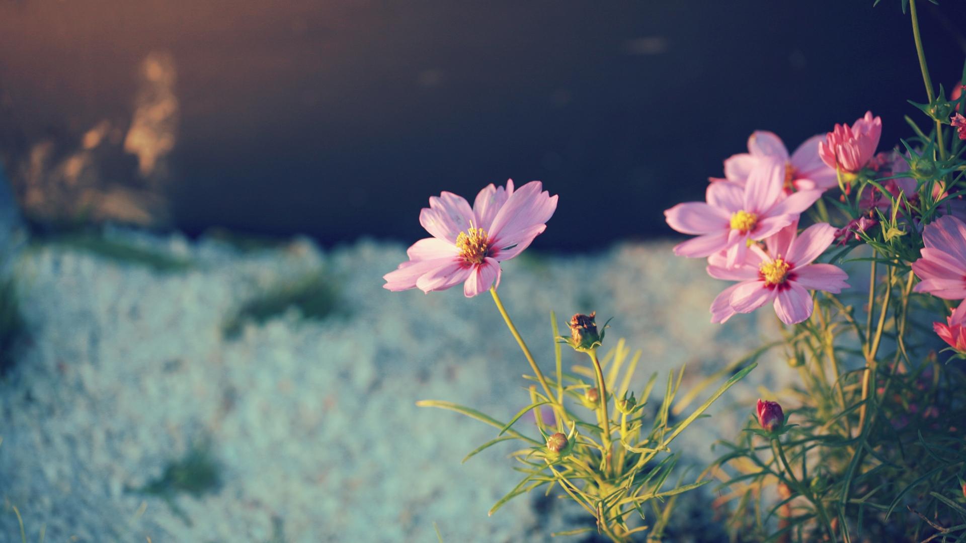 Фото цветов высокого качества с цитатами
