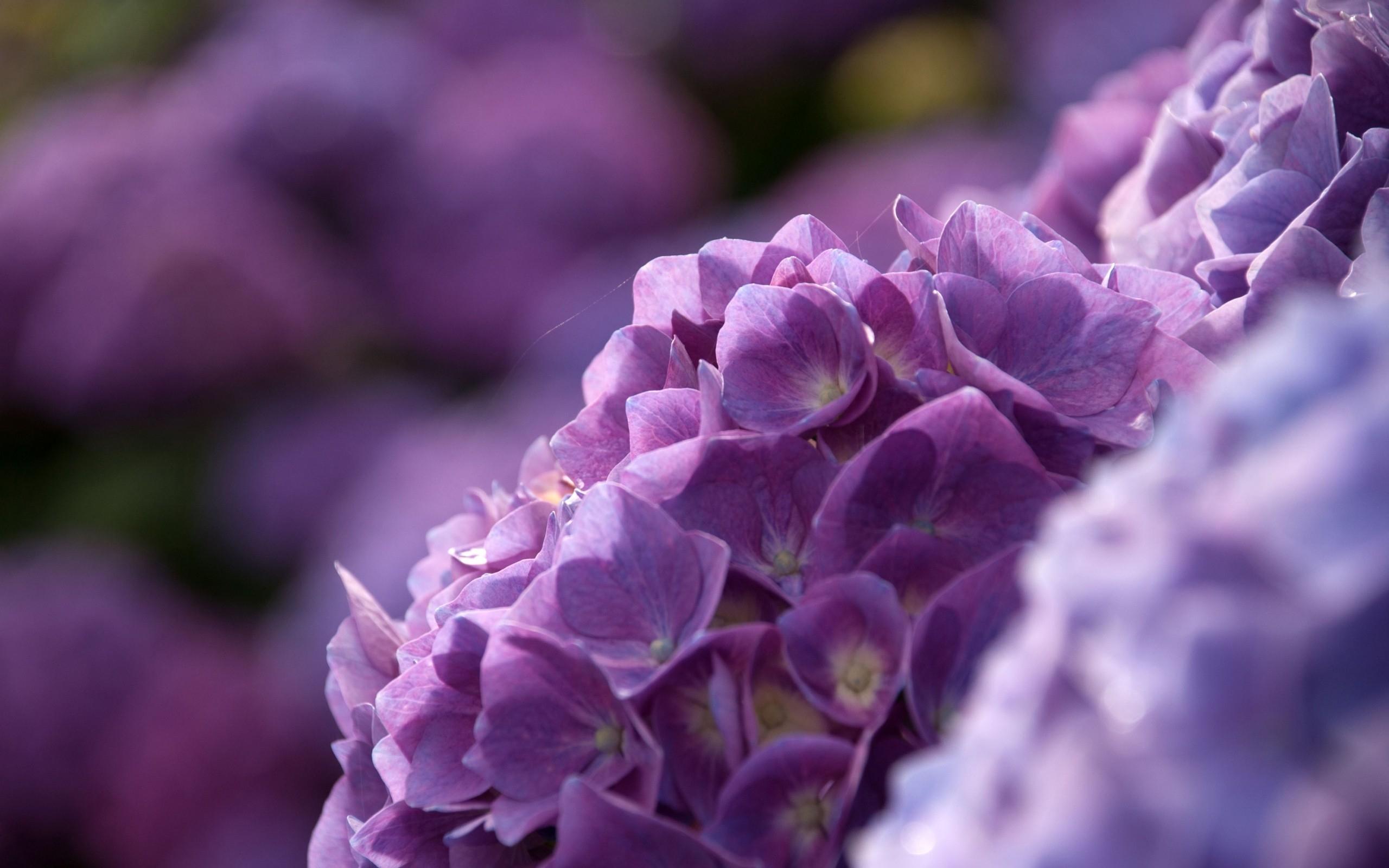 фото с фиолетовым оттенком времена