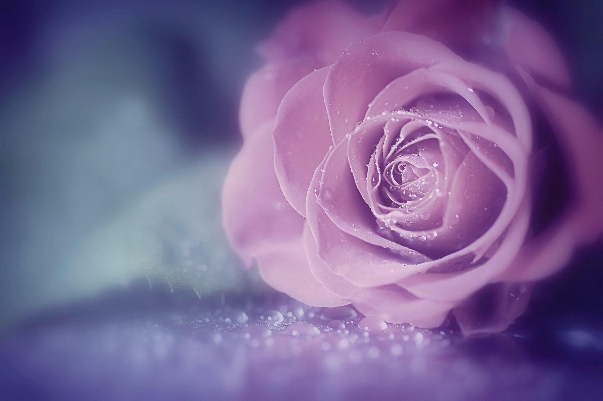 Sfondi Fiori Viola Blu Fiorire Fiore Petalo Sfondo Del