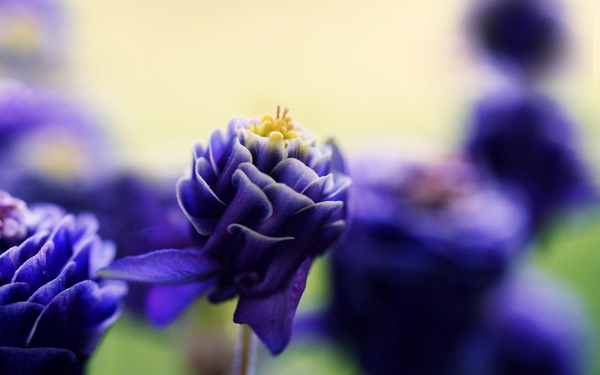 картинки с цветами фиолетово-синего решением проблемы