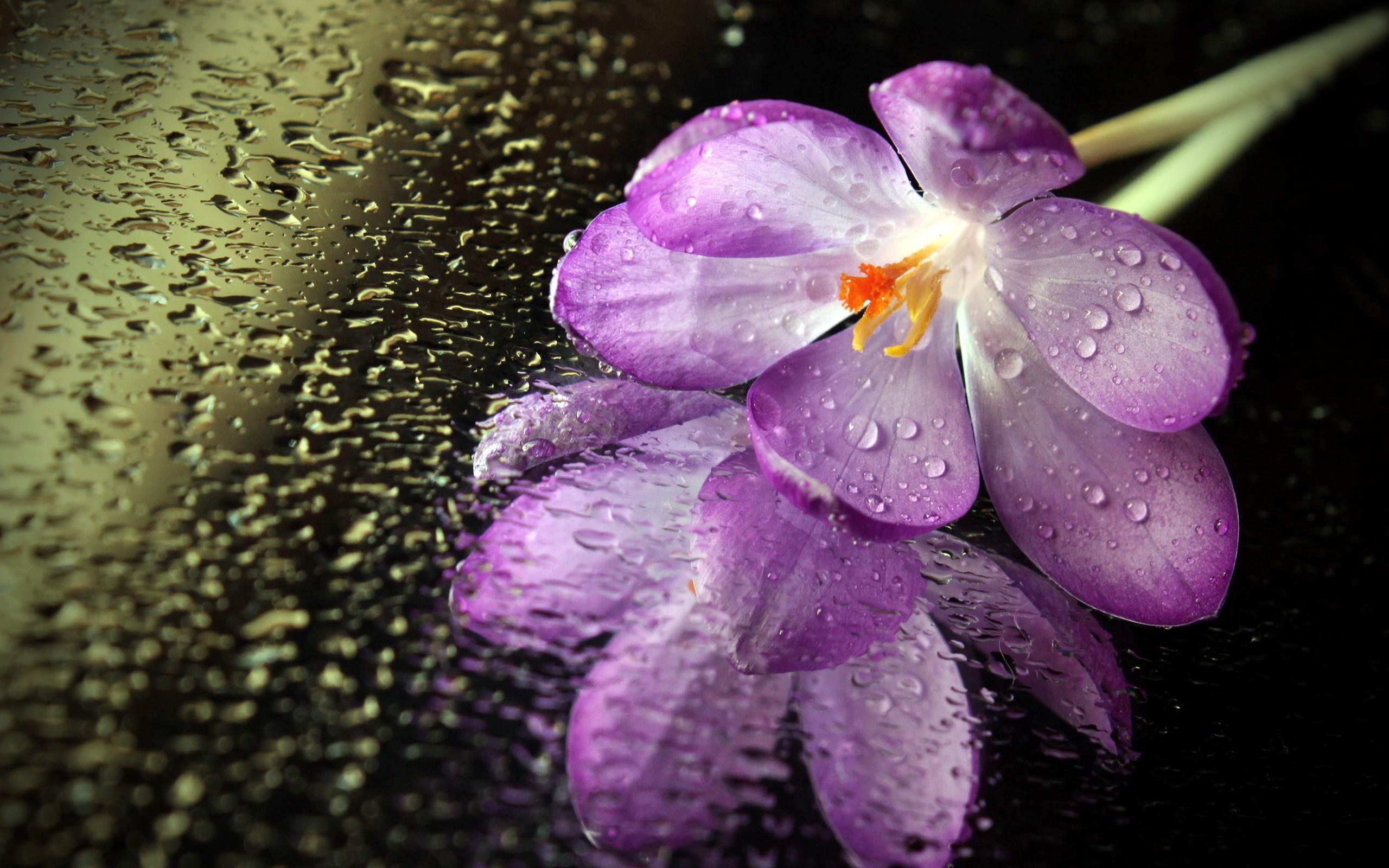картинки цветы красивые с каплями занимает много места