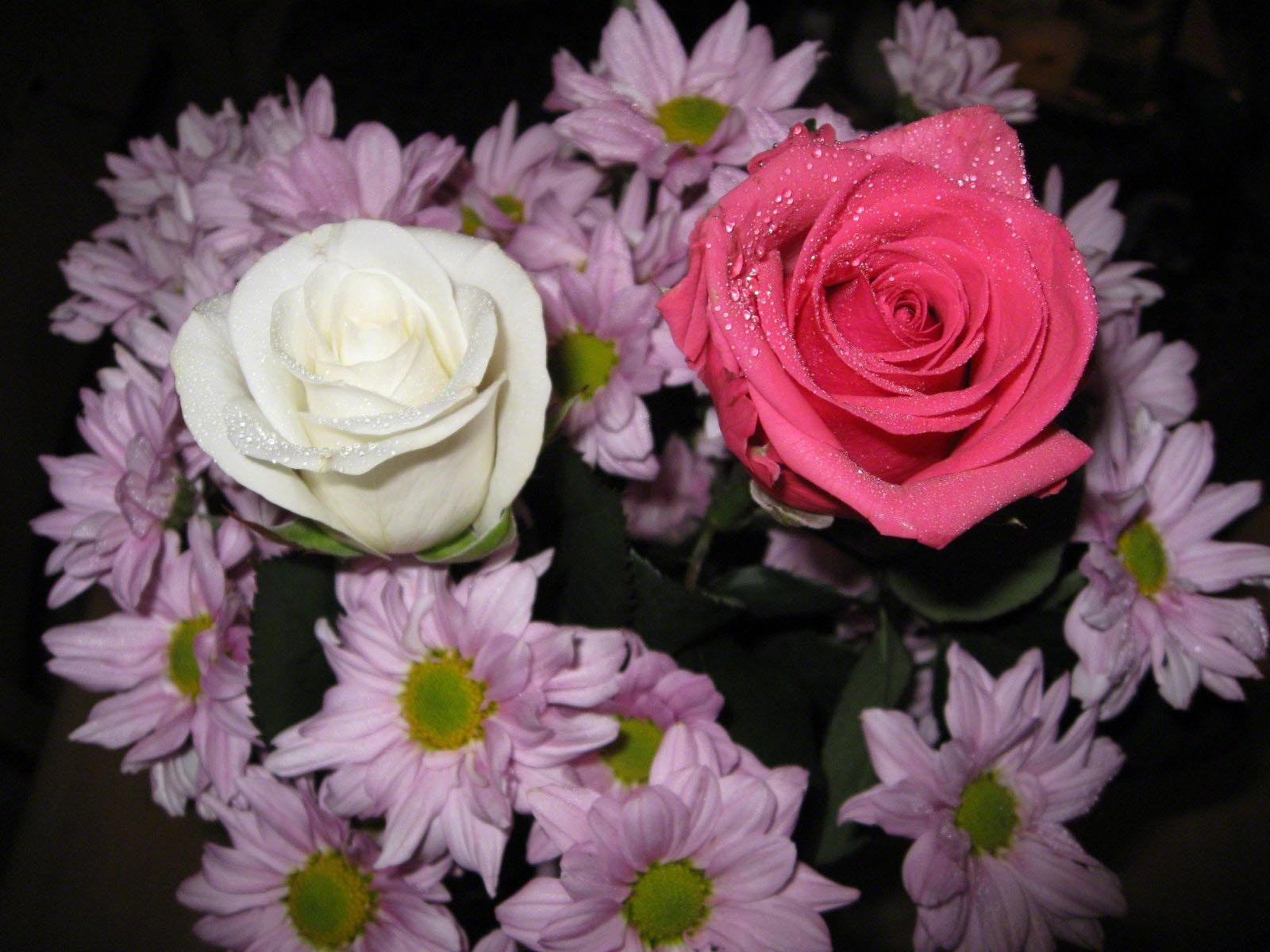 картинки роз хризантем дрокино