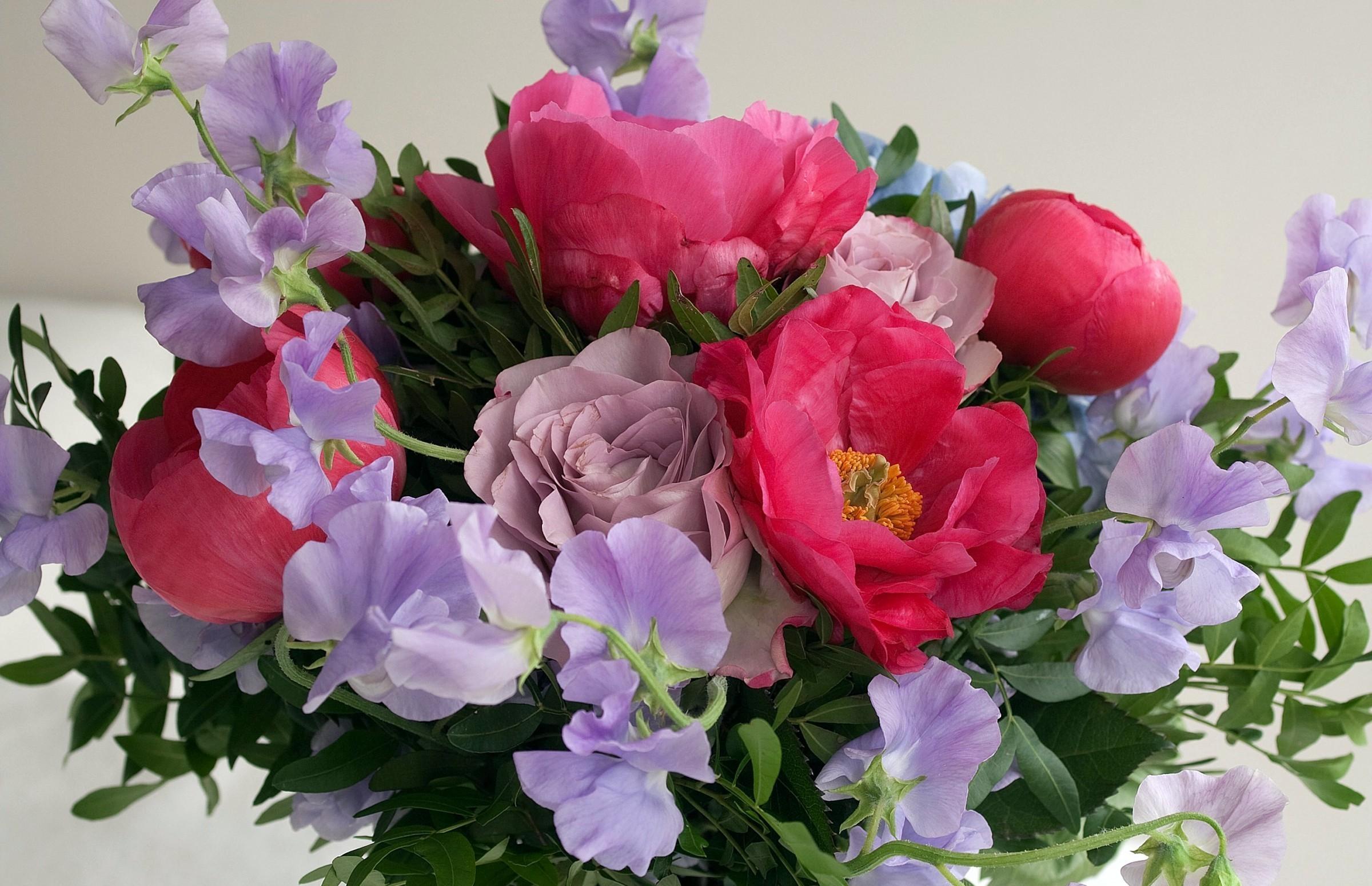 Fond D Ecran Rose Fleur Tendresse Des Roses Petale Pivoine