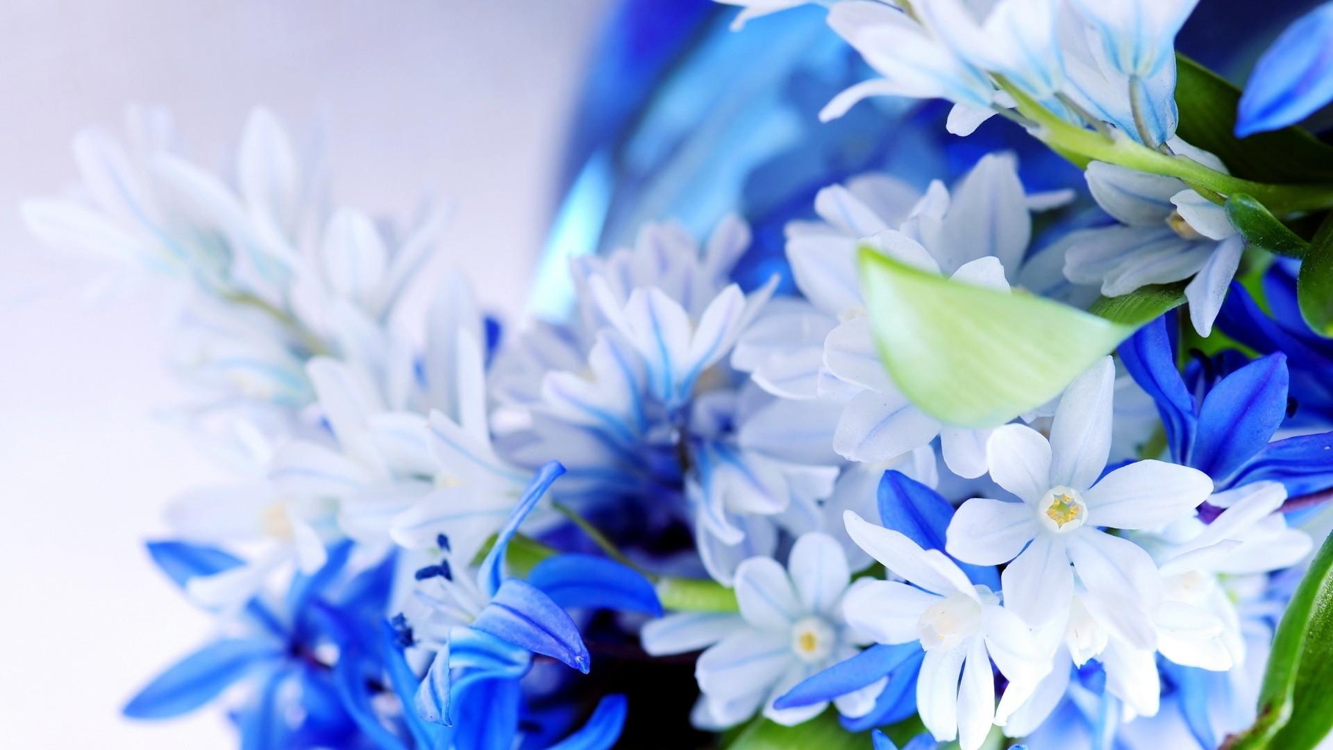 Wallpaper Flowers Plants Blue Blossom Beautiful Flora Petal