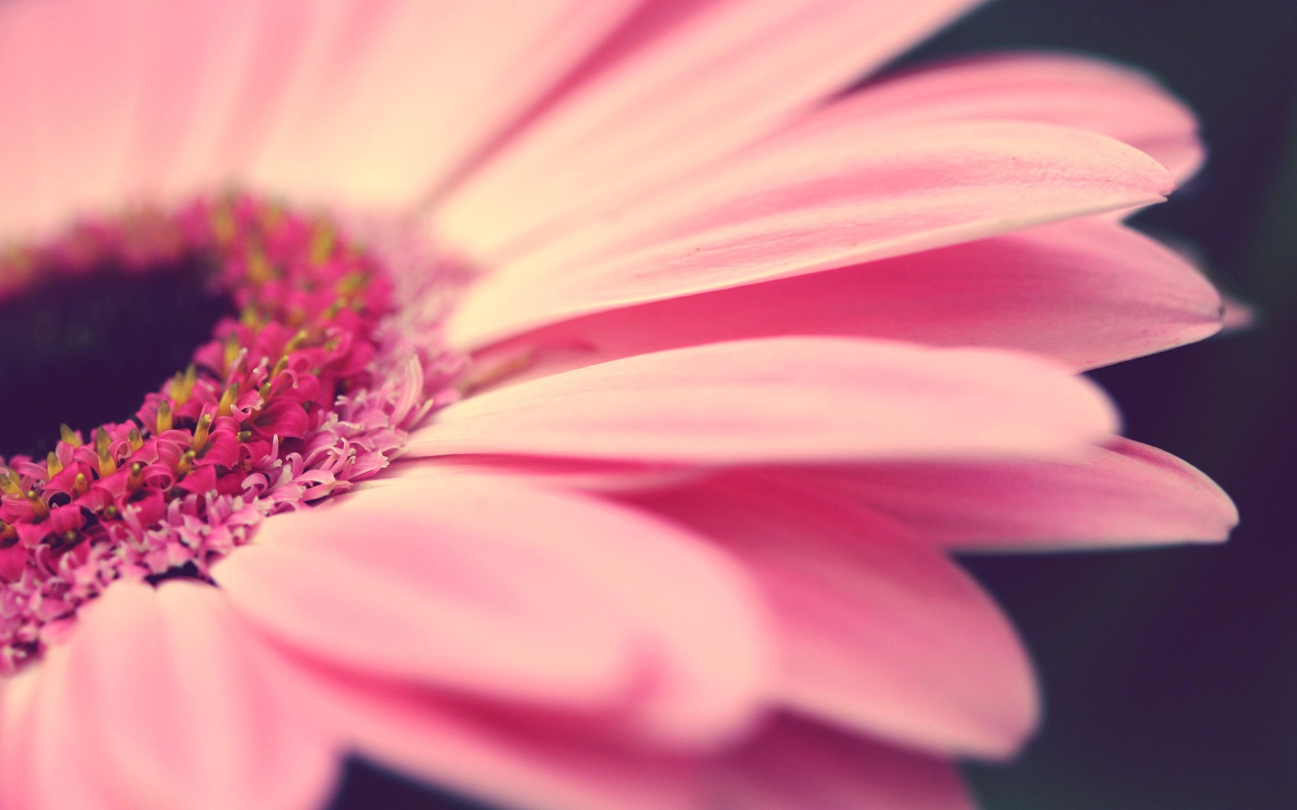 картинки на телефон растения тюль превосходно