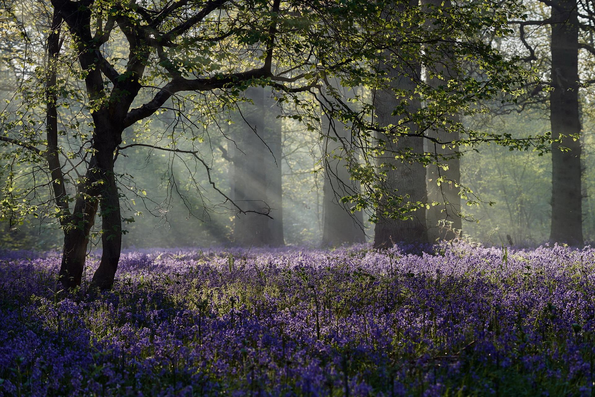 красивые картинки весенние лес образы функции отличаются
