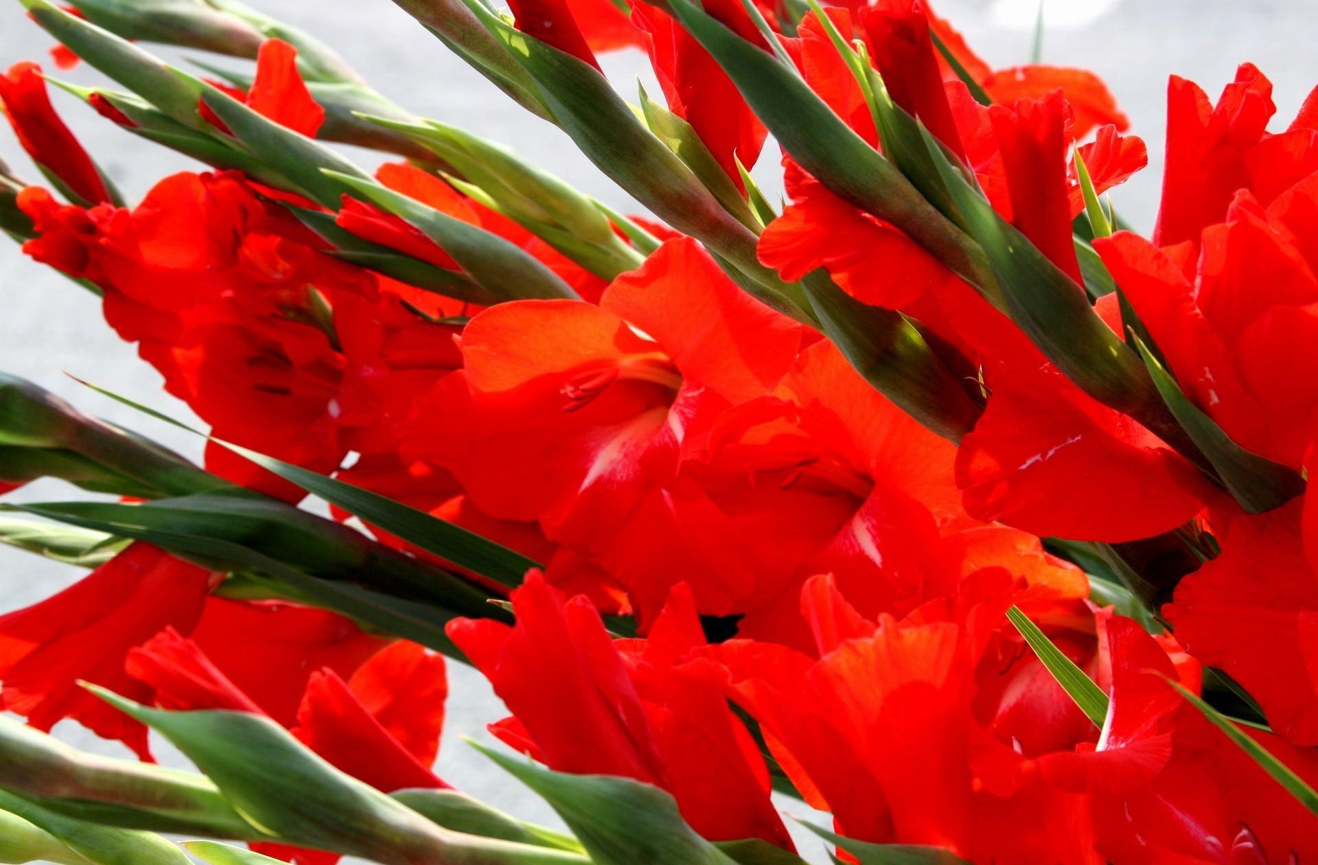 открытки цветы гладиолусы поучительные предсказания были