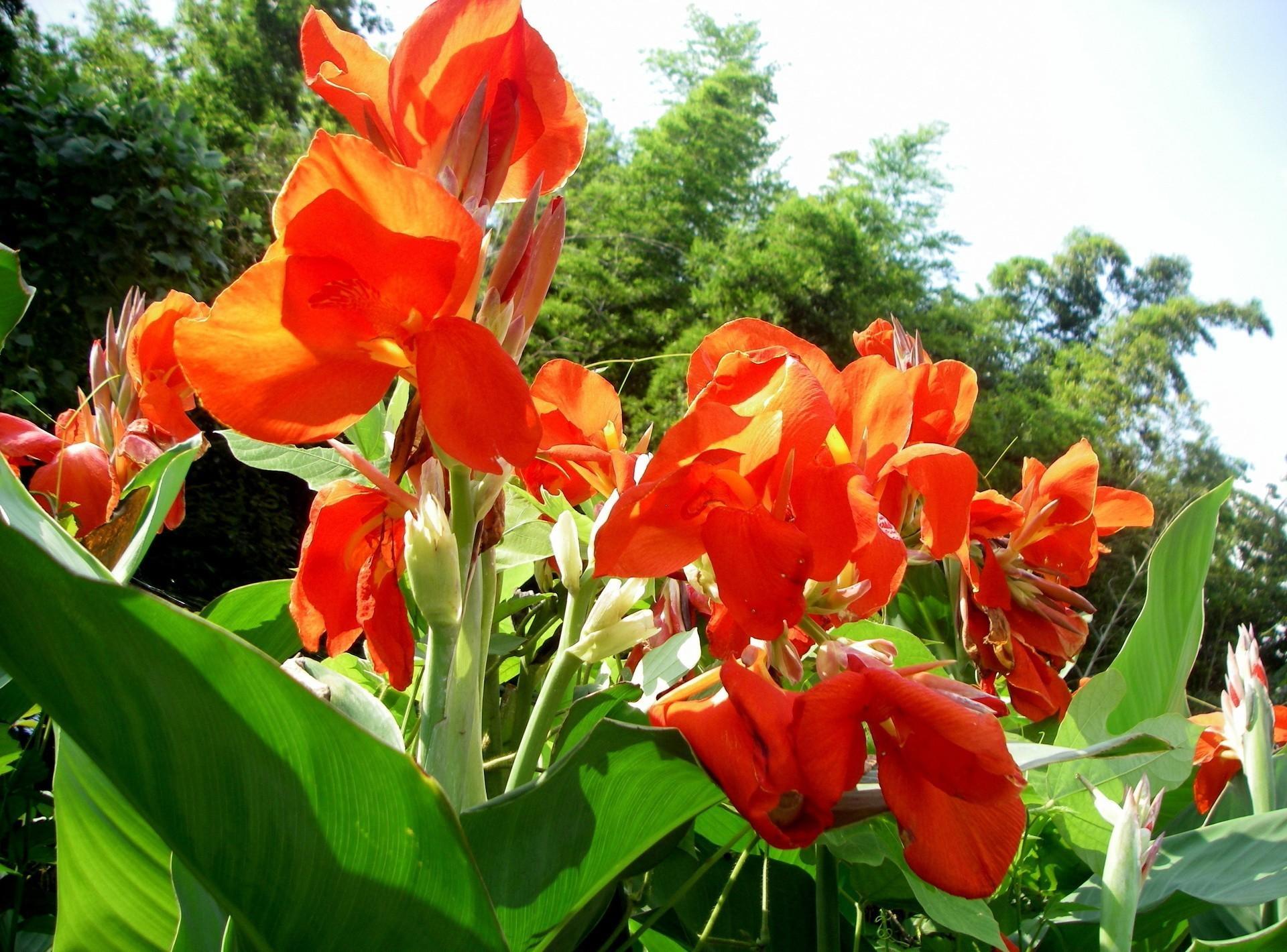 Красные цветы в саду названия и фото