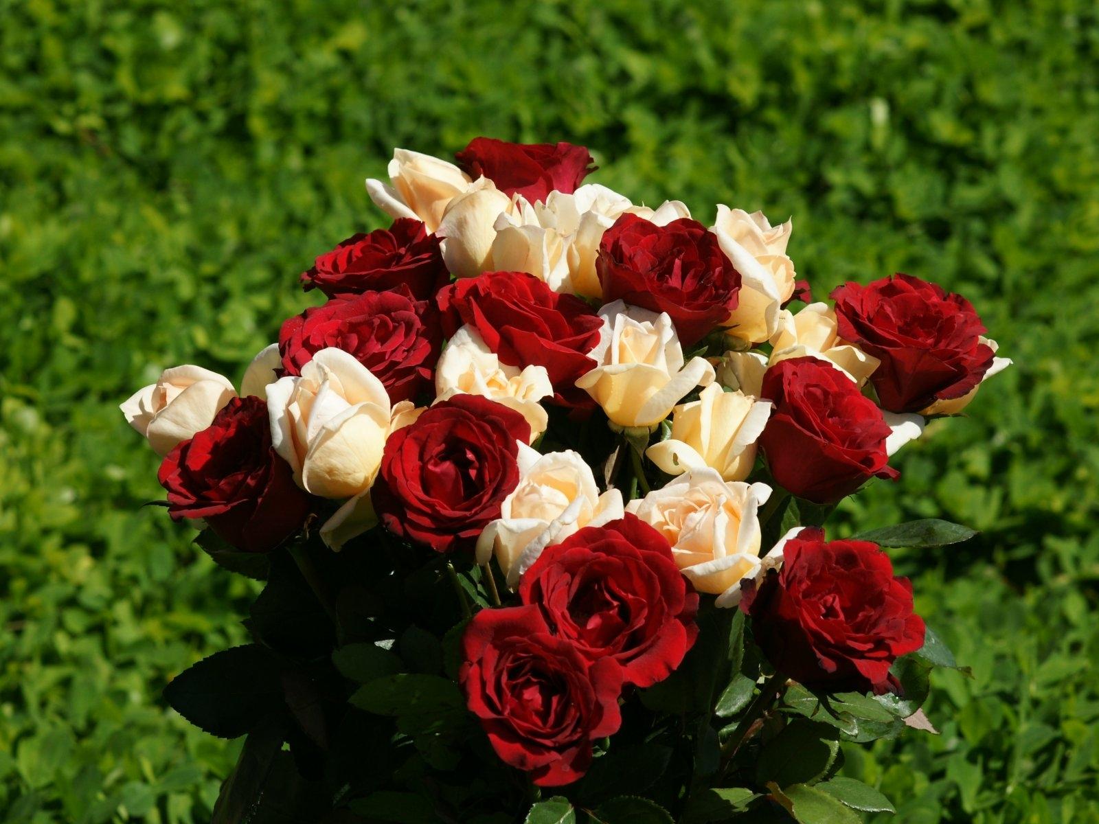 Wallpaper : red, flora, petal, different, land plant, flowering plant, floristry, garden roses ...