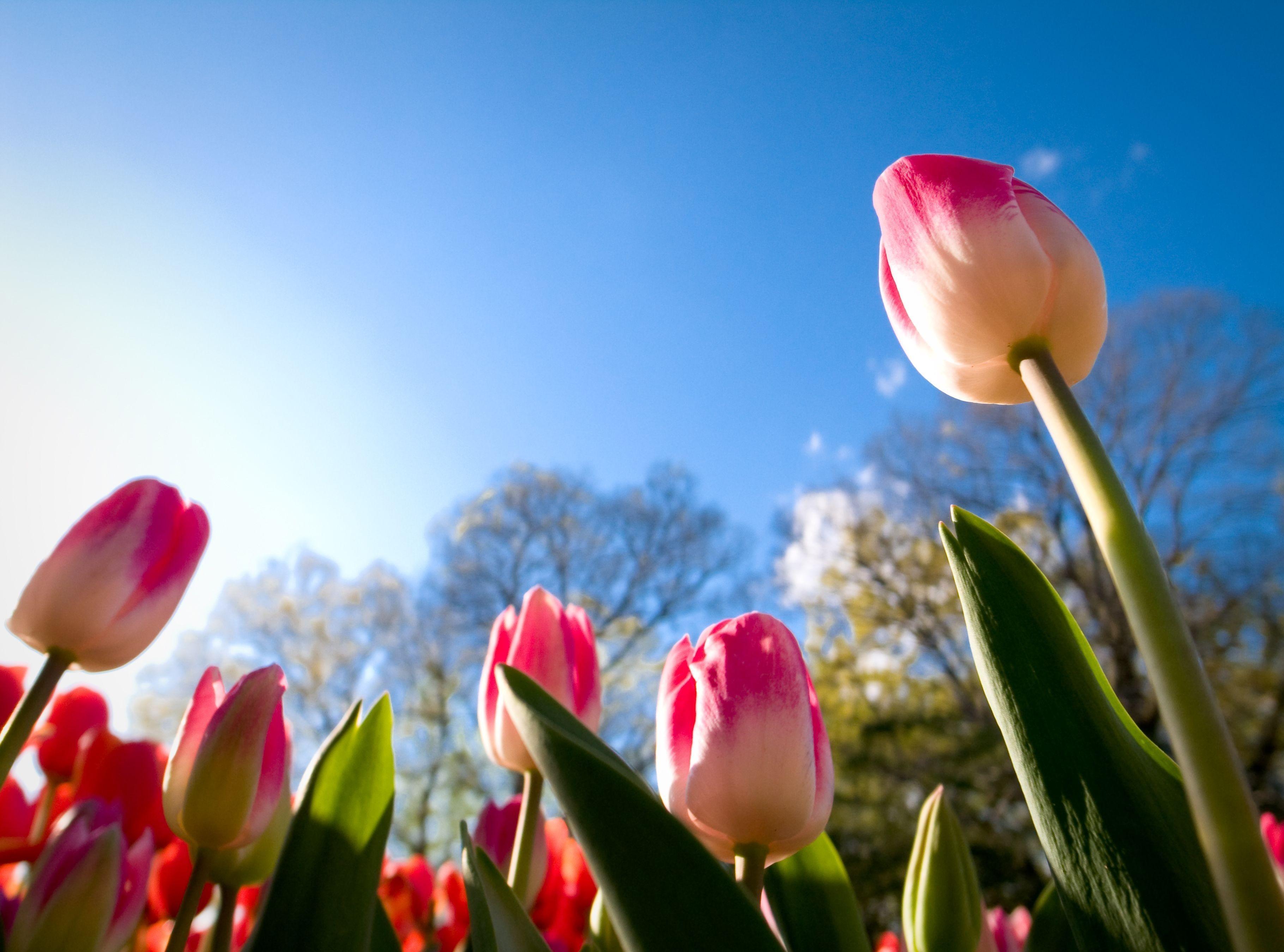 видим, картинки с тюльпанами и весной клуб считается