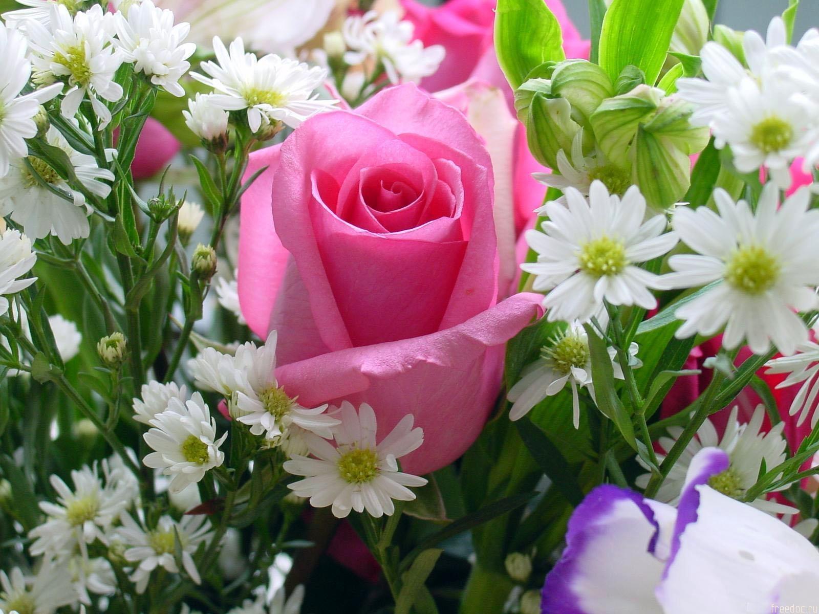 сюда цветы до слез фото представляет собой комбинацию