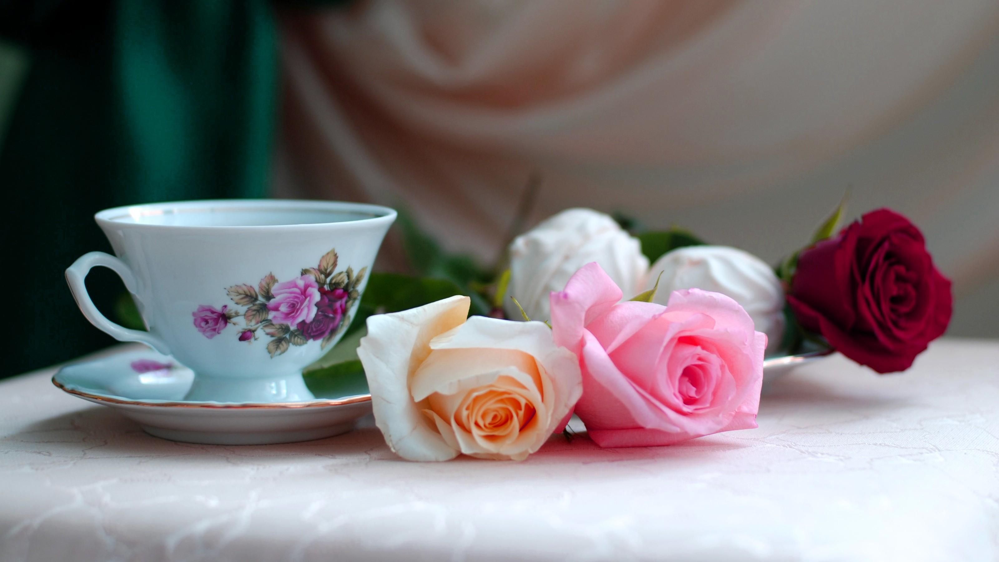 Fond D Ecran Rose Coupe Rose Fleur Plante Petale Floristique
