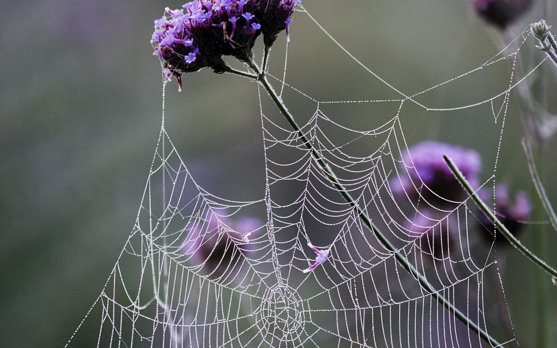 Паутинка на цветах фото
