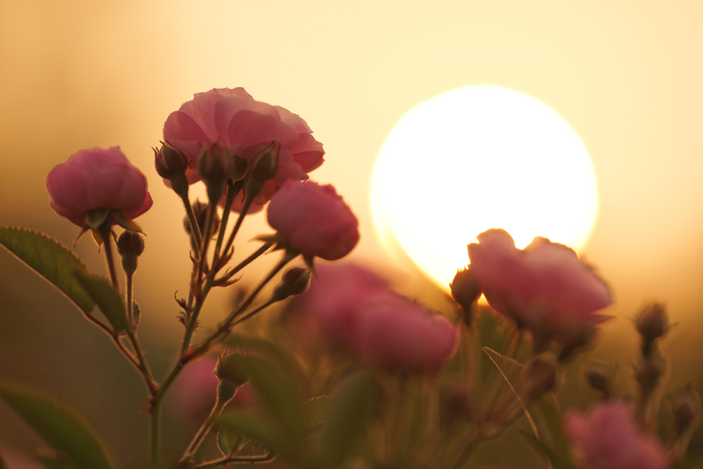 уже четвертую картинки цветы на фоне заката места