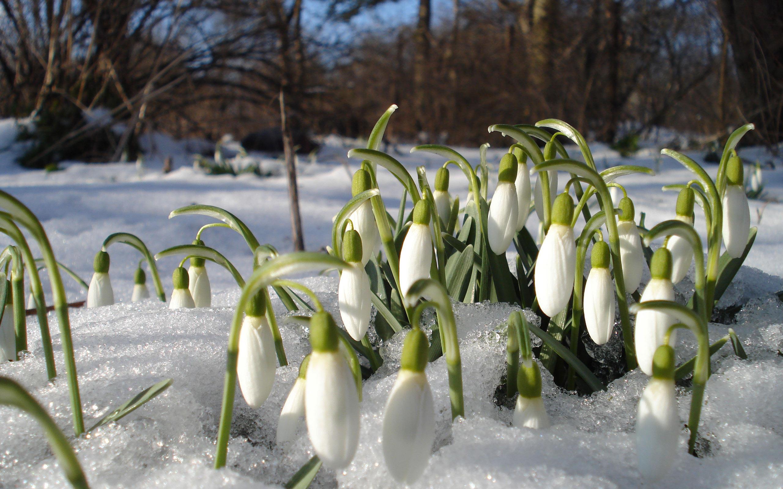 они, свидетельствам фотообои на рабочий стол весна подснежники сфотографировалась клубникой