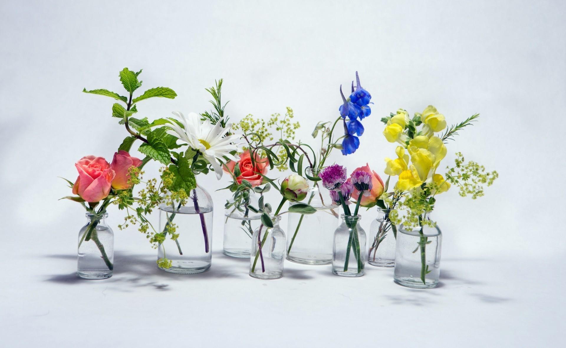Fondos De Pantalla Flores Agua Rama Rosa Manzanilla