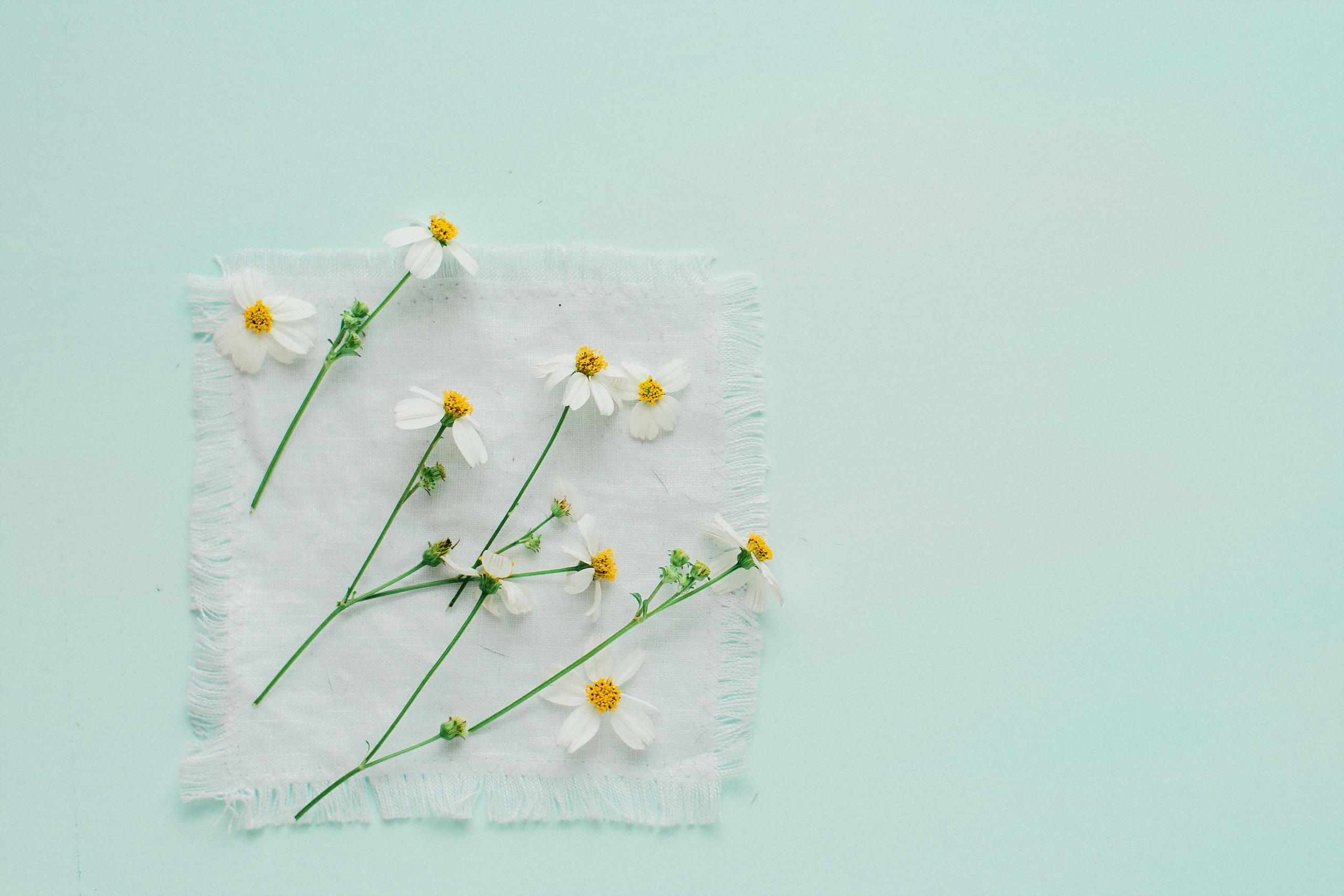 картинка весна минимализм найдена одна статья