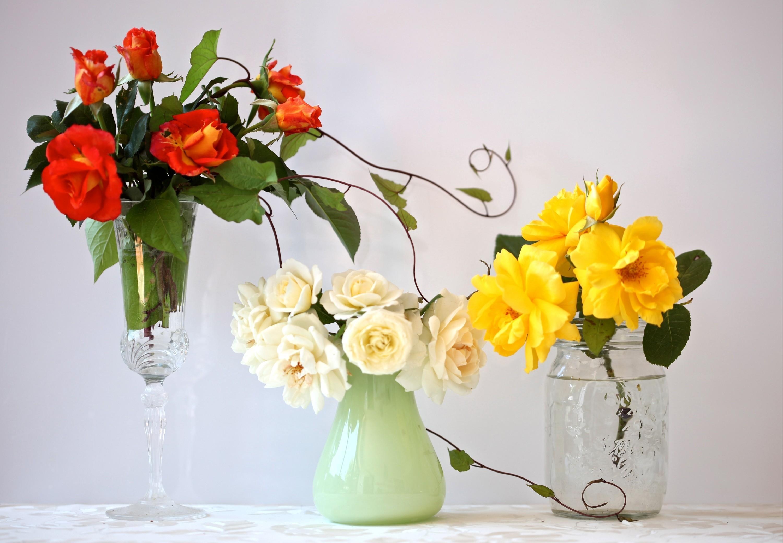 Sfondi giallo mazzi di fiori flora rose vaso tre for Pianta fiorita da esterno