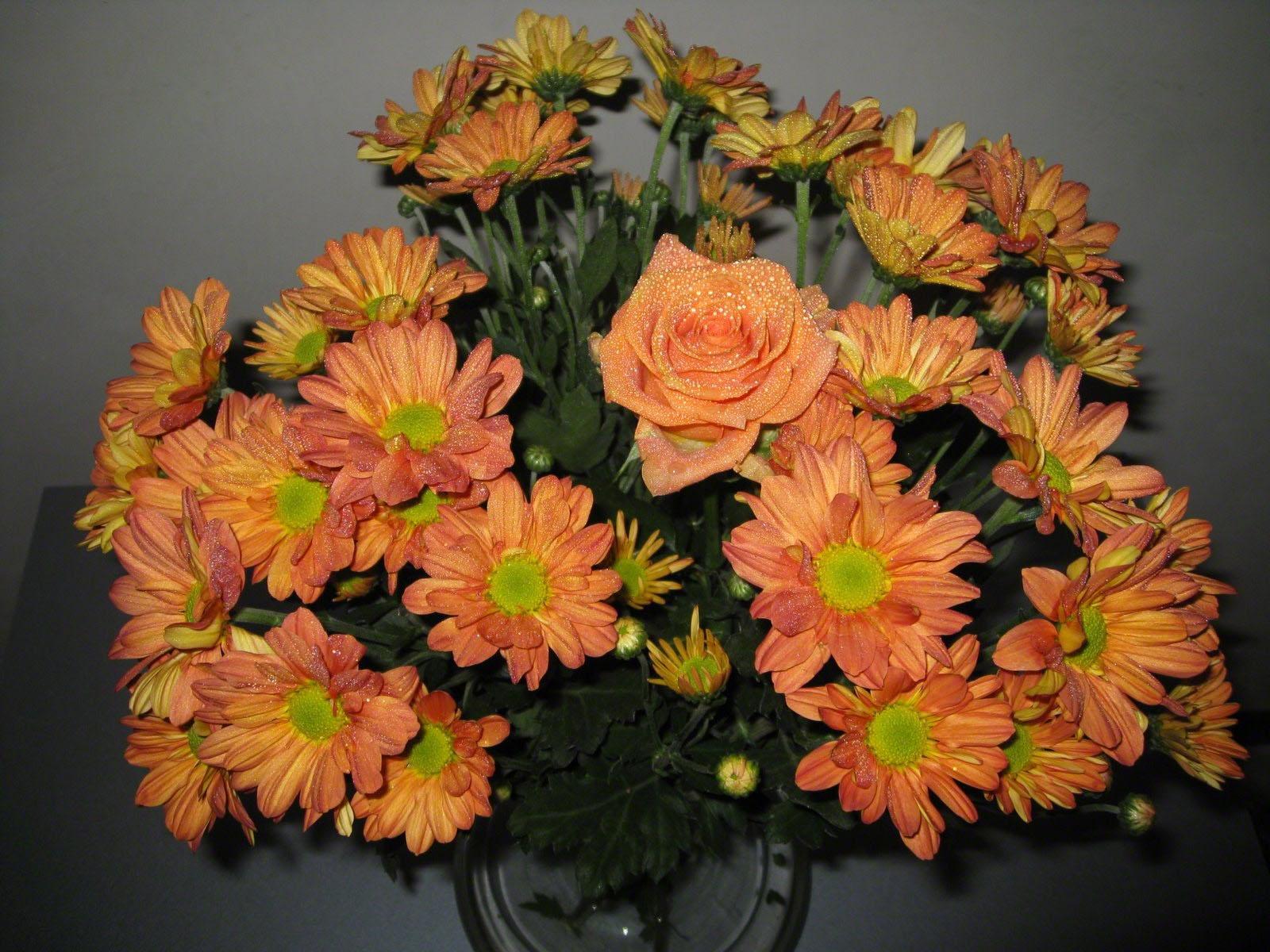 обоев помогут букеты хризантем в вазе фото остров, задумываясь ищу