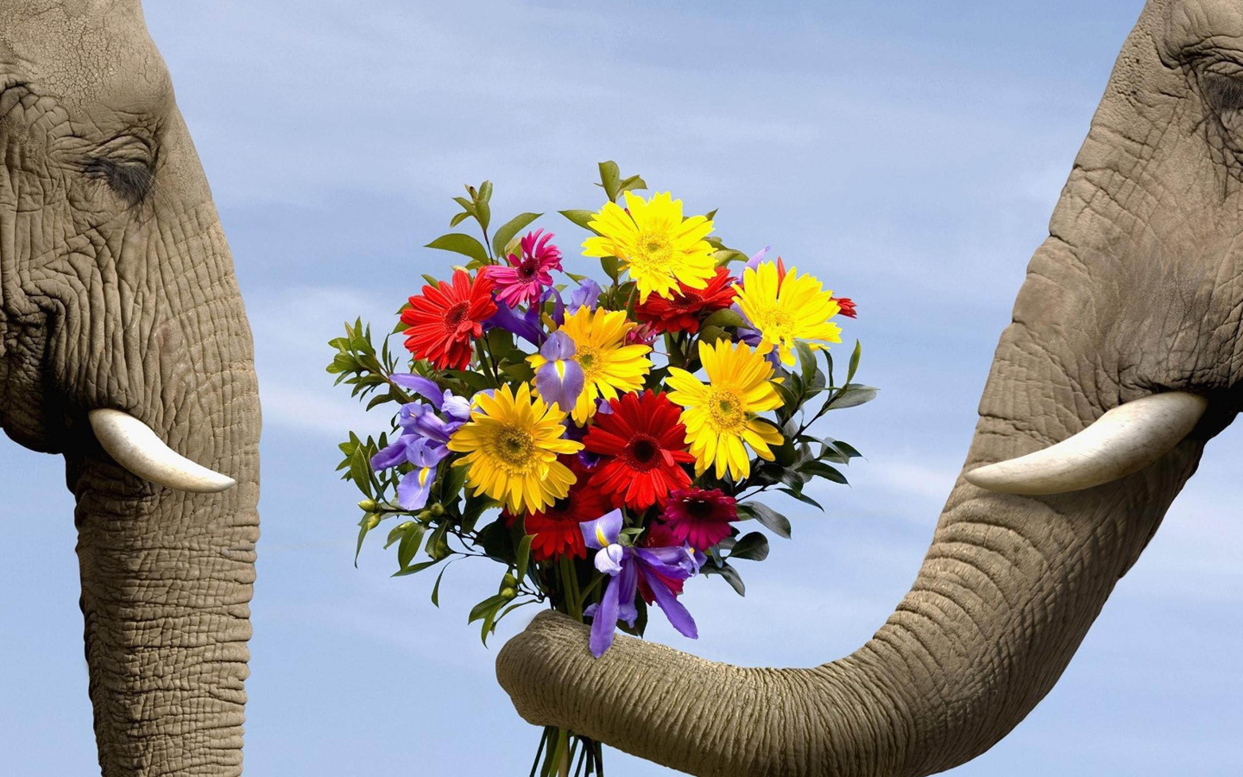 Hintergrundbilder : Blumen, Gelb, Elefant, Frühling, KUNST, Blume ...