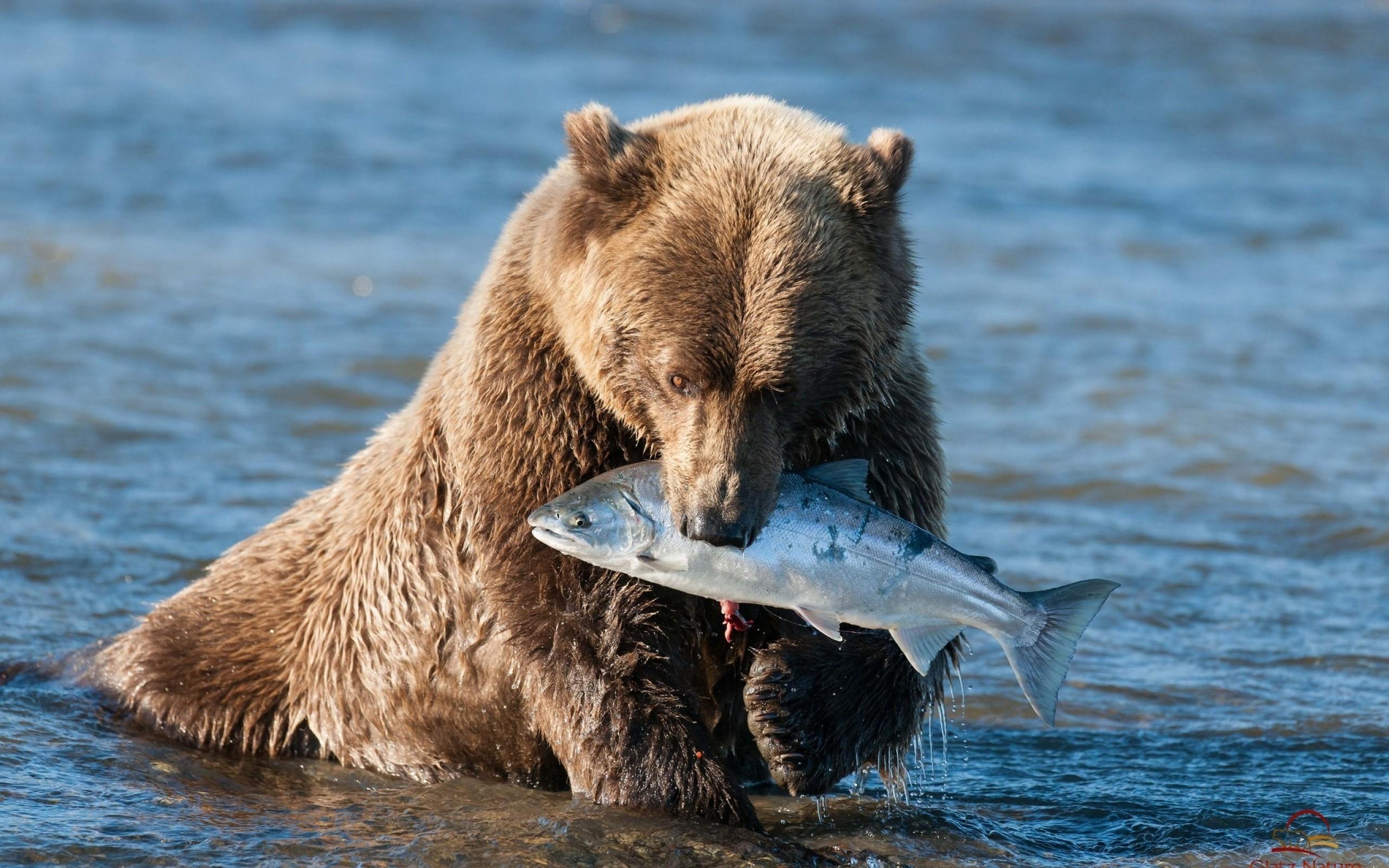 Скачать Обои На Телефон Медведь