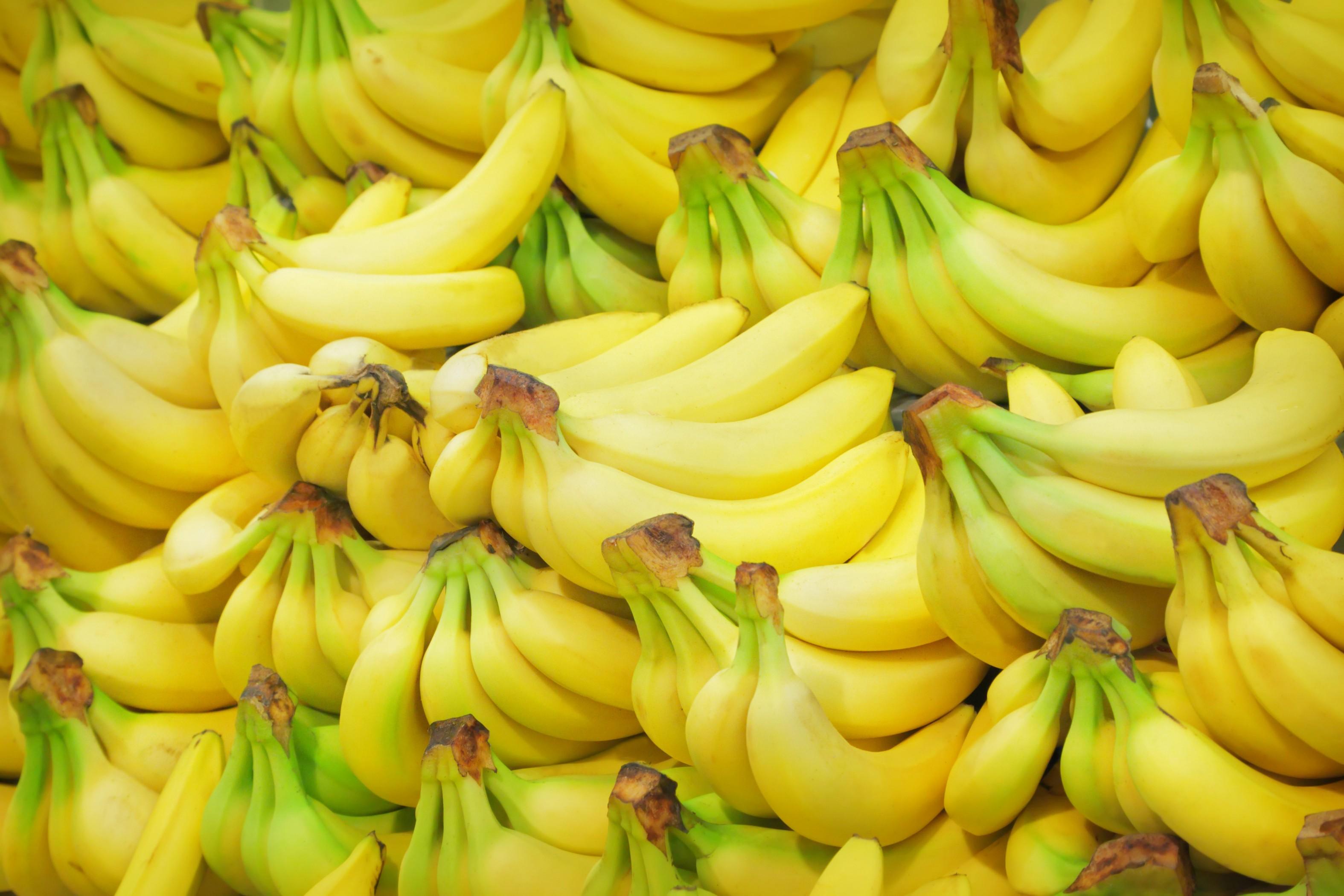 Pianta Di Banana Foto sfondi : cibo, frutta, giallo, banane, fiore, banana