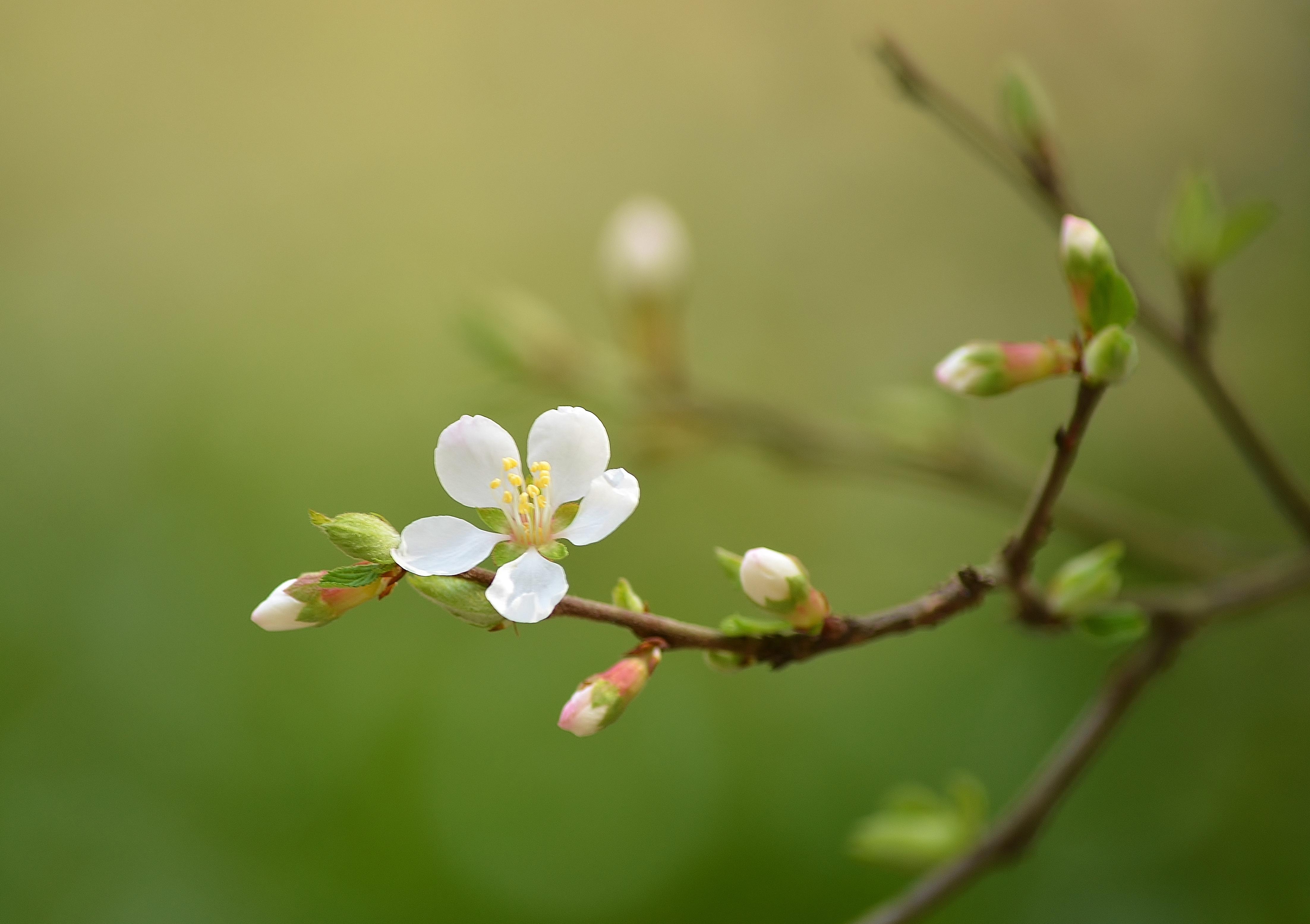 Sfondi Cibo Natura Ramo Verde Fiorire Primavera Foglia