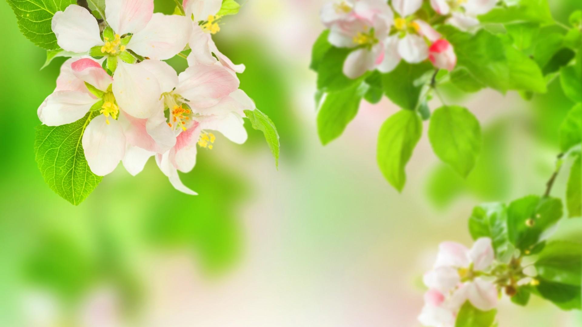 яблони в цвету обои на стол № 217657 без смс