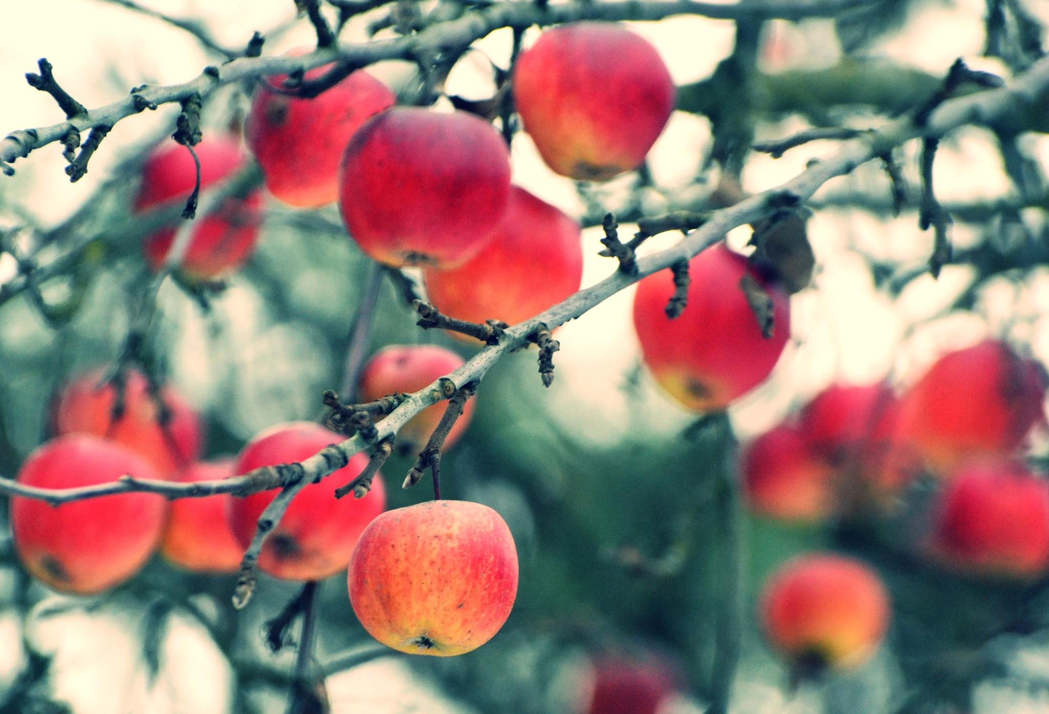 Unduh 7100 Koleksi Wallpaper Bunga Pohon Dan Buah HD Terbaik
