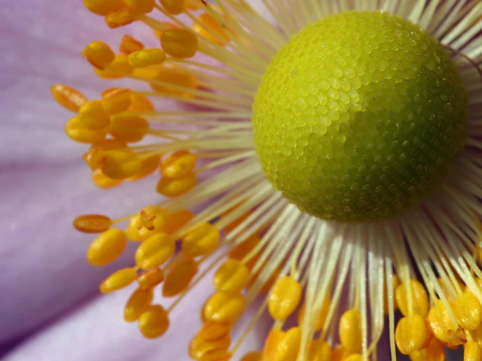 некоторых пыльца цветов фото тогда смогли