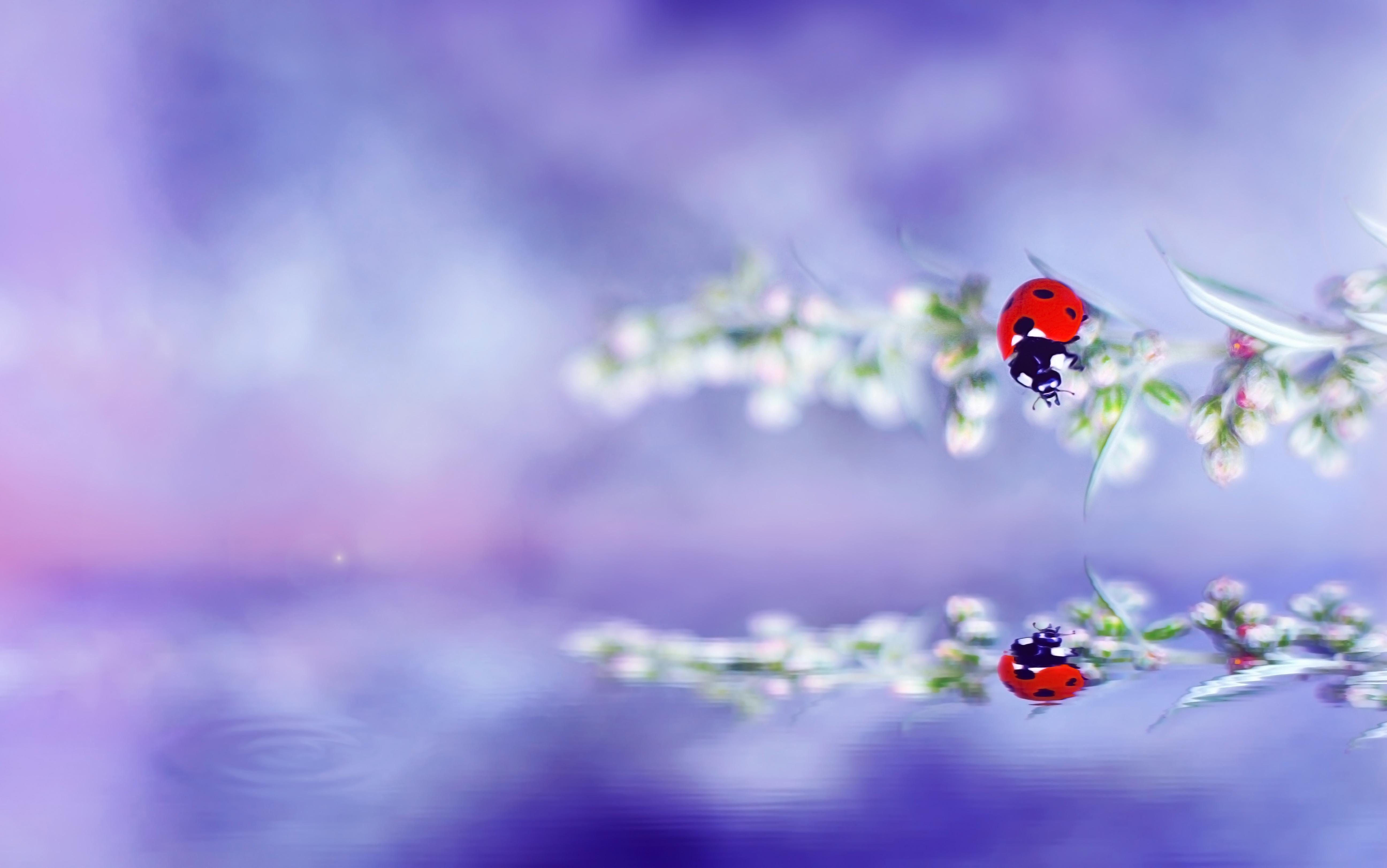 Fond d 39 cran for t beaut couleur fleur bleu for Miroir pc ecran