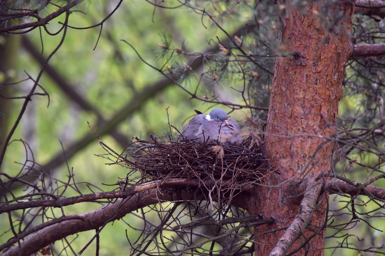 картинки птицы в весеннем лесу кафе