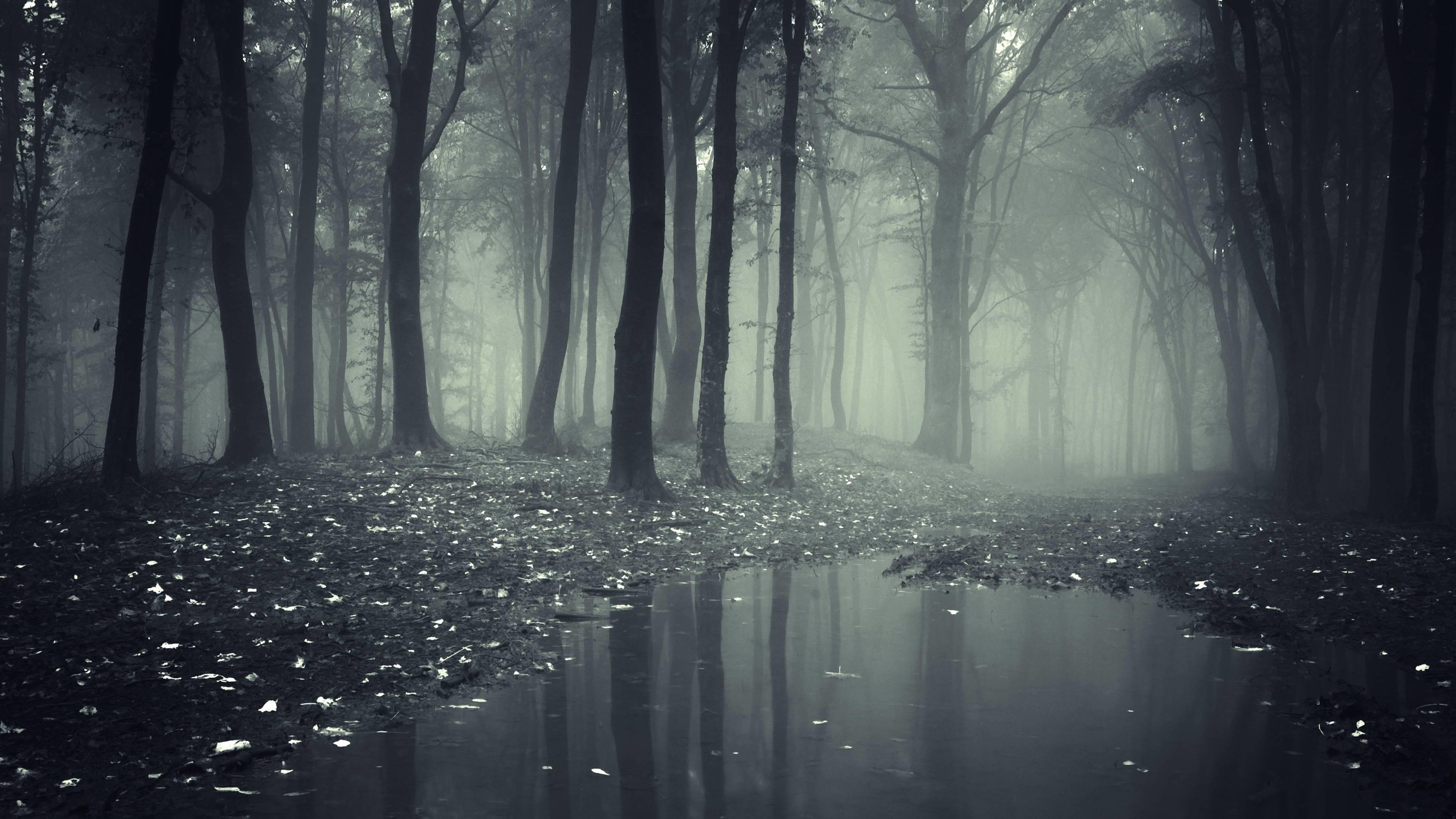 Картинка с темным лесом