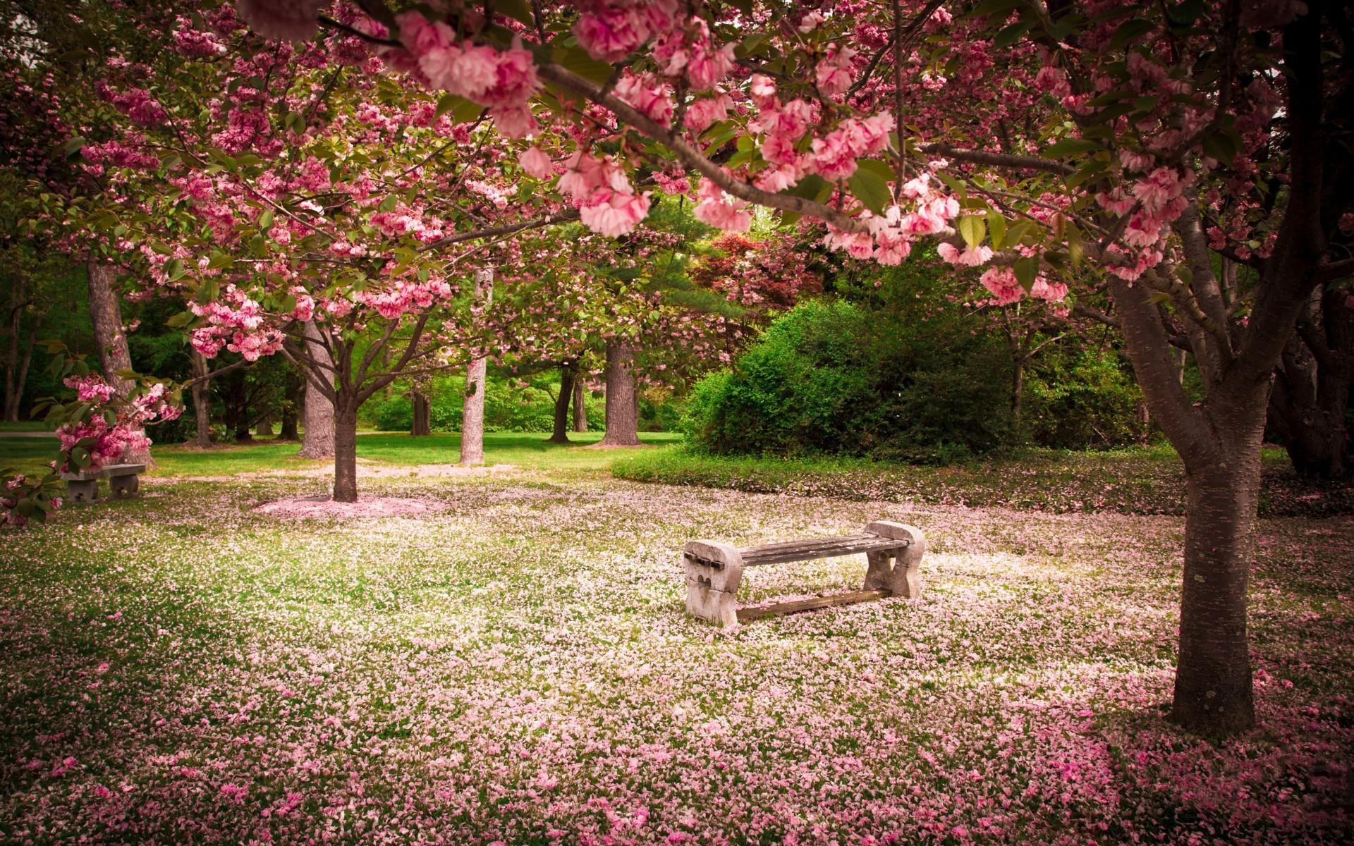 Fondos de pantalla bosque jard n flor de cerezo - Plantas de temporada primavera ...