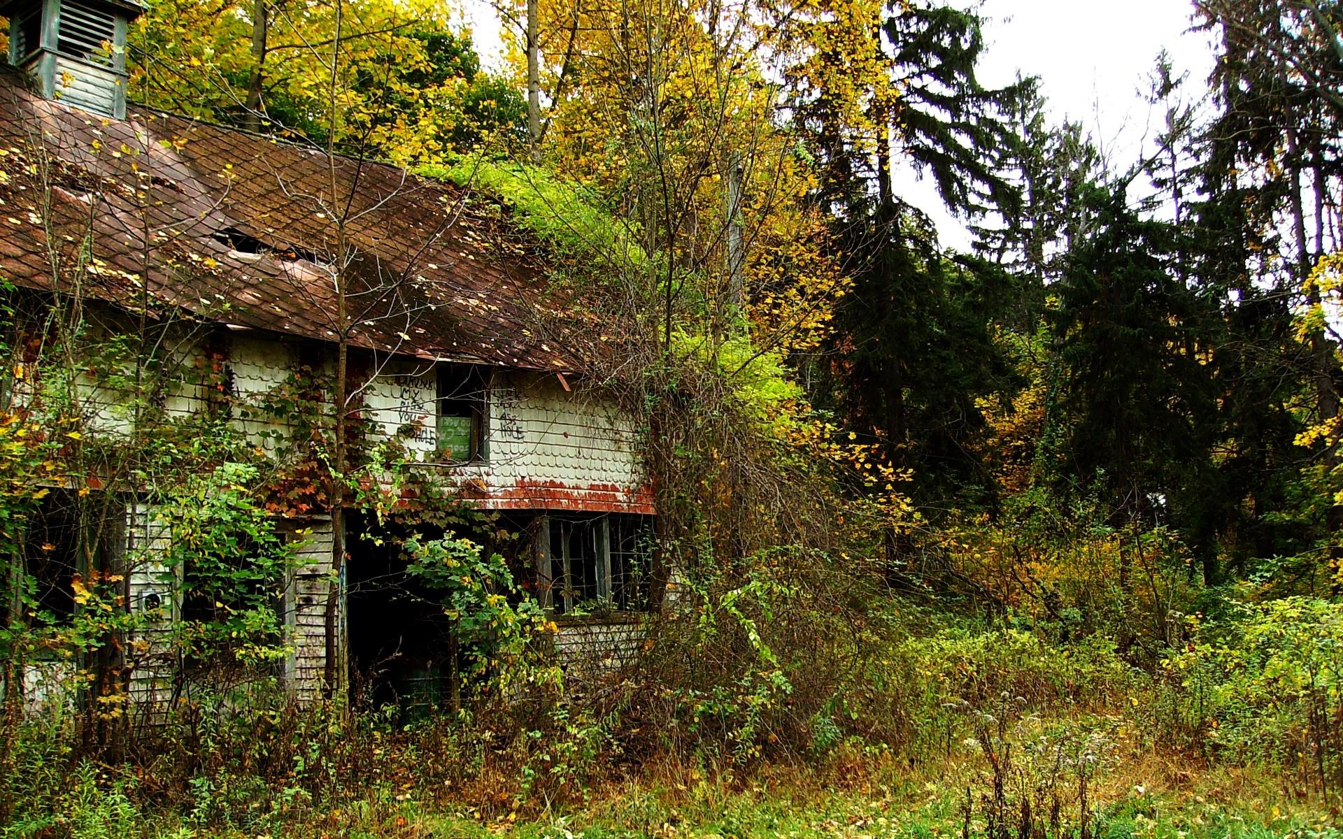 Wallpaper : forest, garden, nature, ruin, abandoned, house, green ...