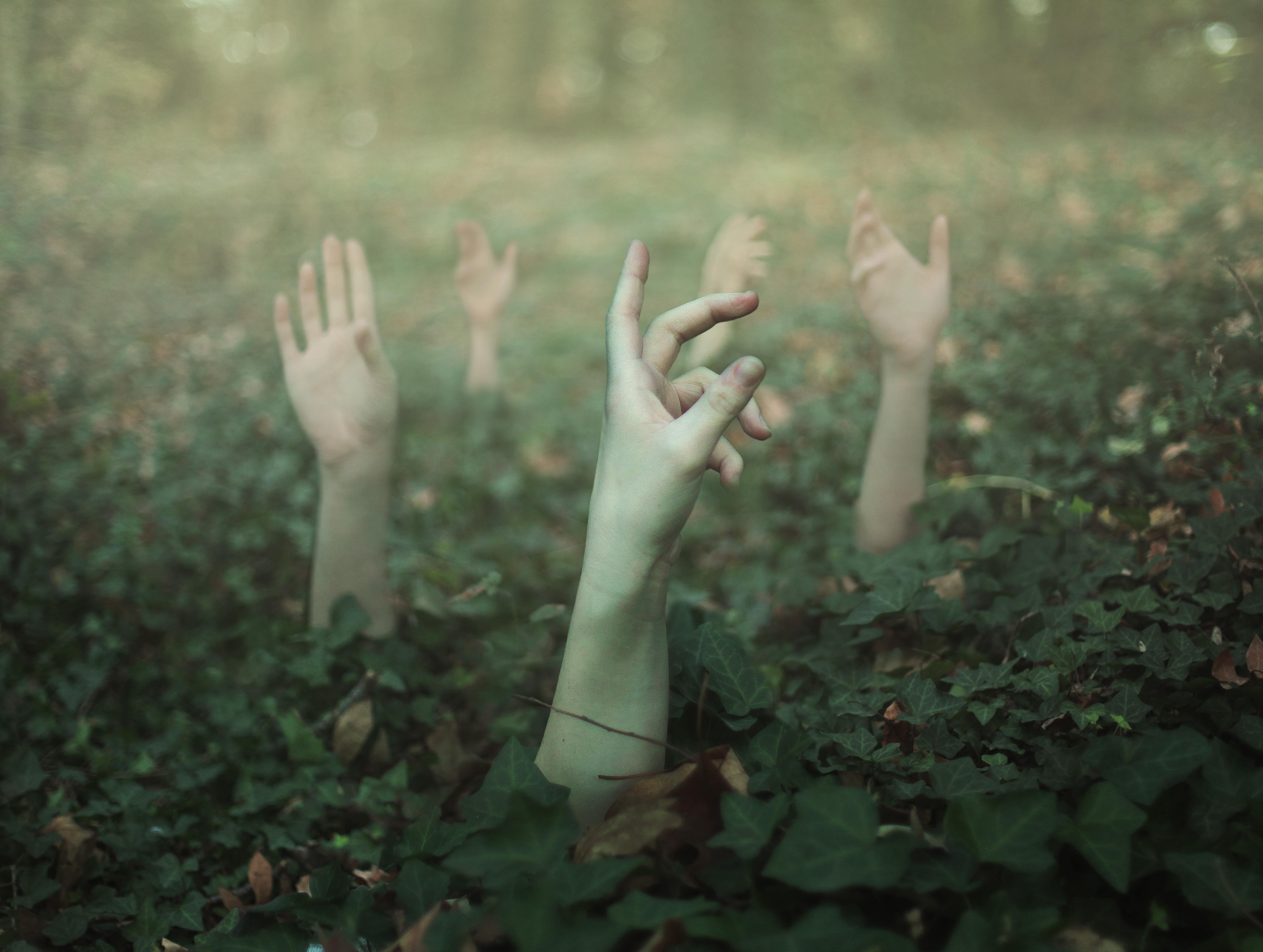 твой первый лес на ладони картинки подарок