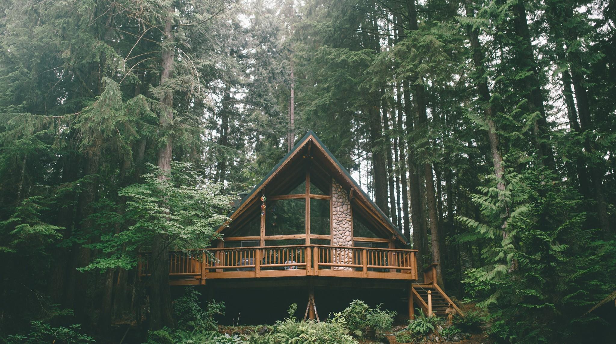 Wallpaper Forest Nature Building Hut Wilderness