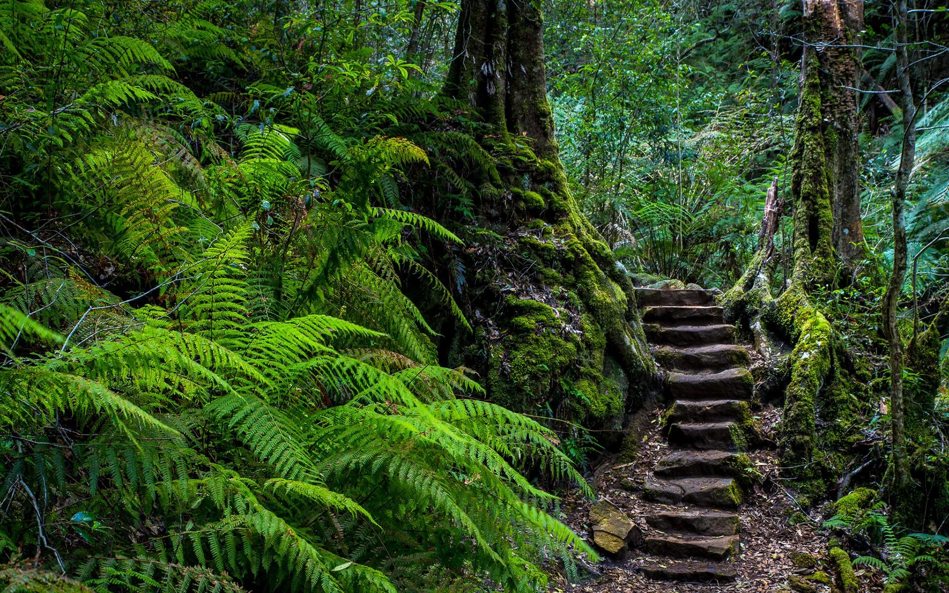 fond d 39 cran la nature vert les foug res r gion sauvage escaliers jungle for t tropicale. Black Bedroom Furniture Sets. Home Design Ideas