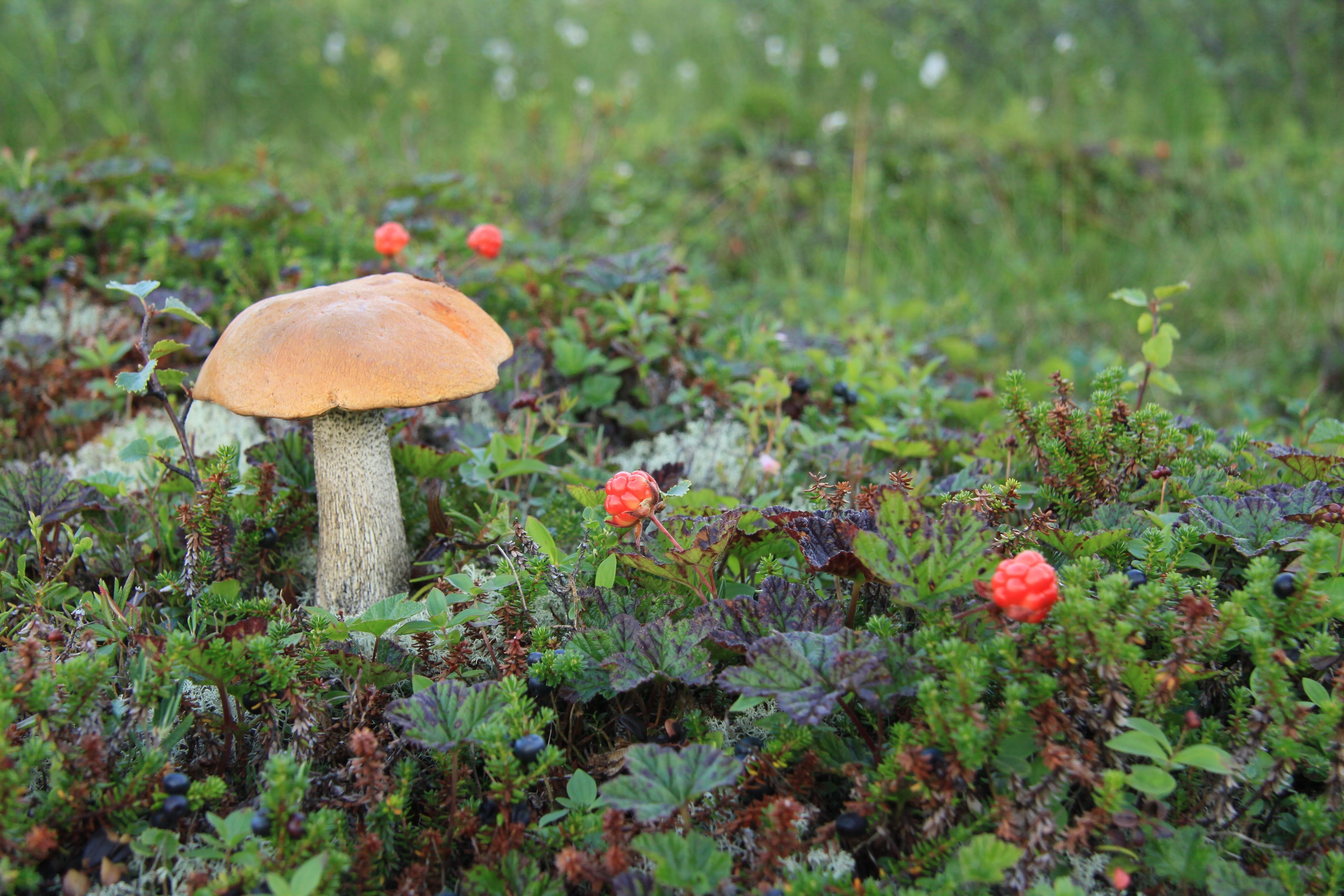 картинки о природе растениях и грибах личность женщины
