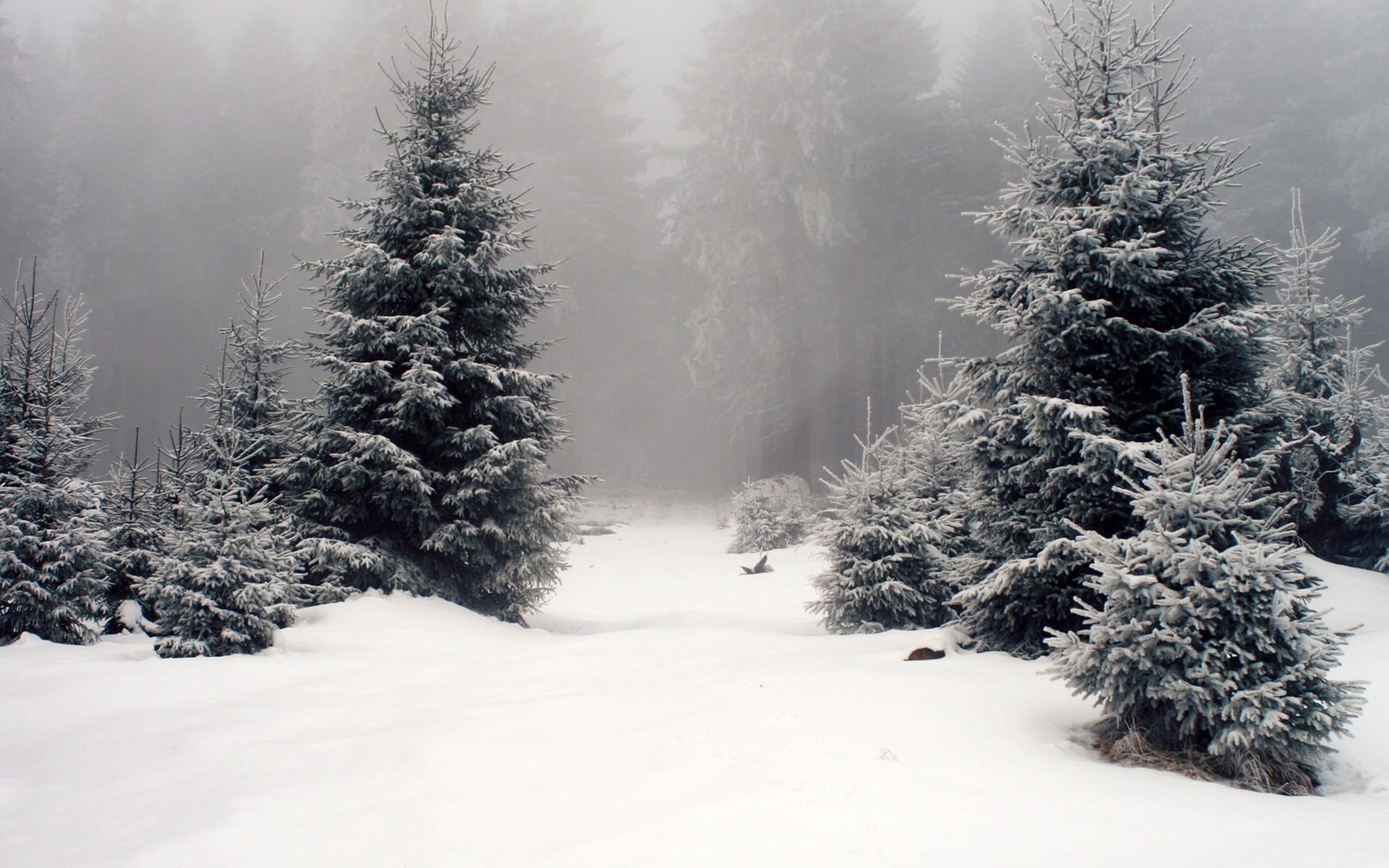 В лесу елочка картинки