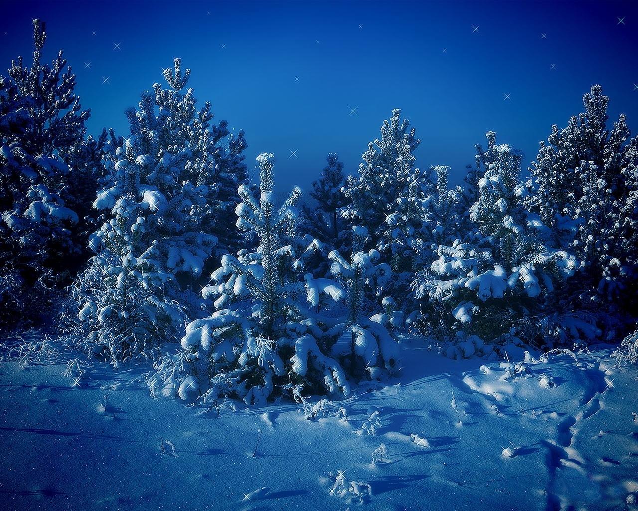 изображением фото сказочный лес под новый год всего, это