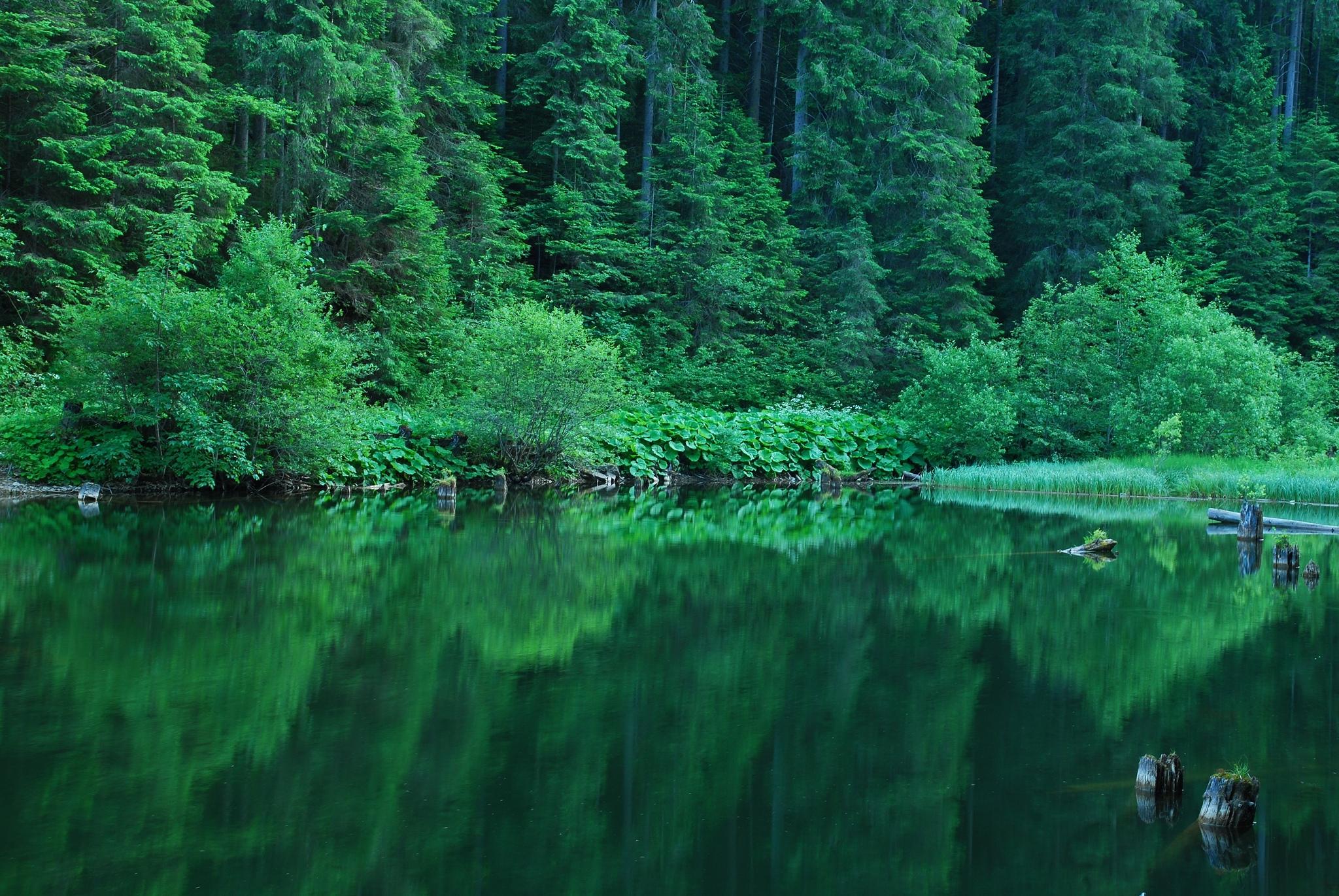 красивые картинки с лесом и водой настоящие фото просто
